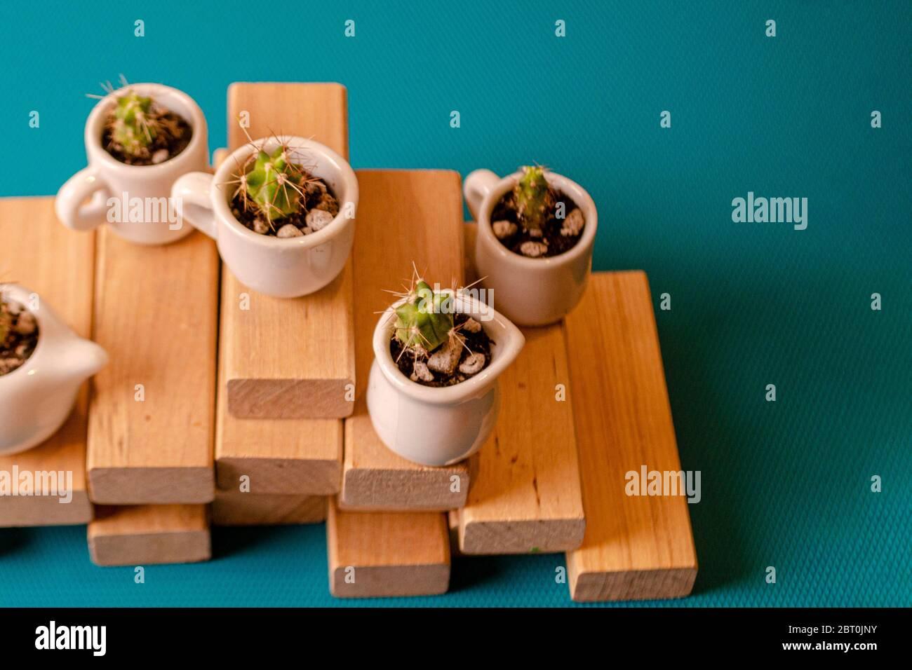 Pequeños cactuses ornamentales en las cuestas de cerámica sobre tablas de madera. Composición de mini jardines de suculentos espinosos sobre el fondo azul. PL Foto de stock