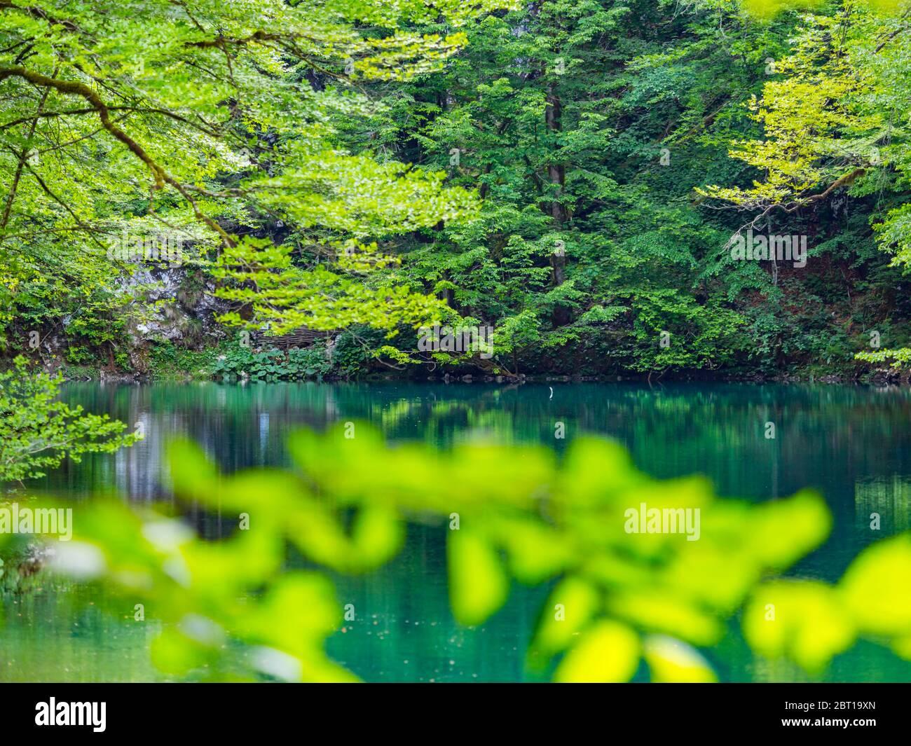 Impresionante primavera Verde color natural en el bosque cerca de la fuente del río Kupa en Croacia Europa rama Foto de stock