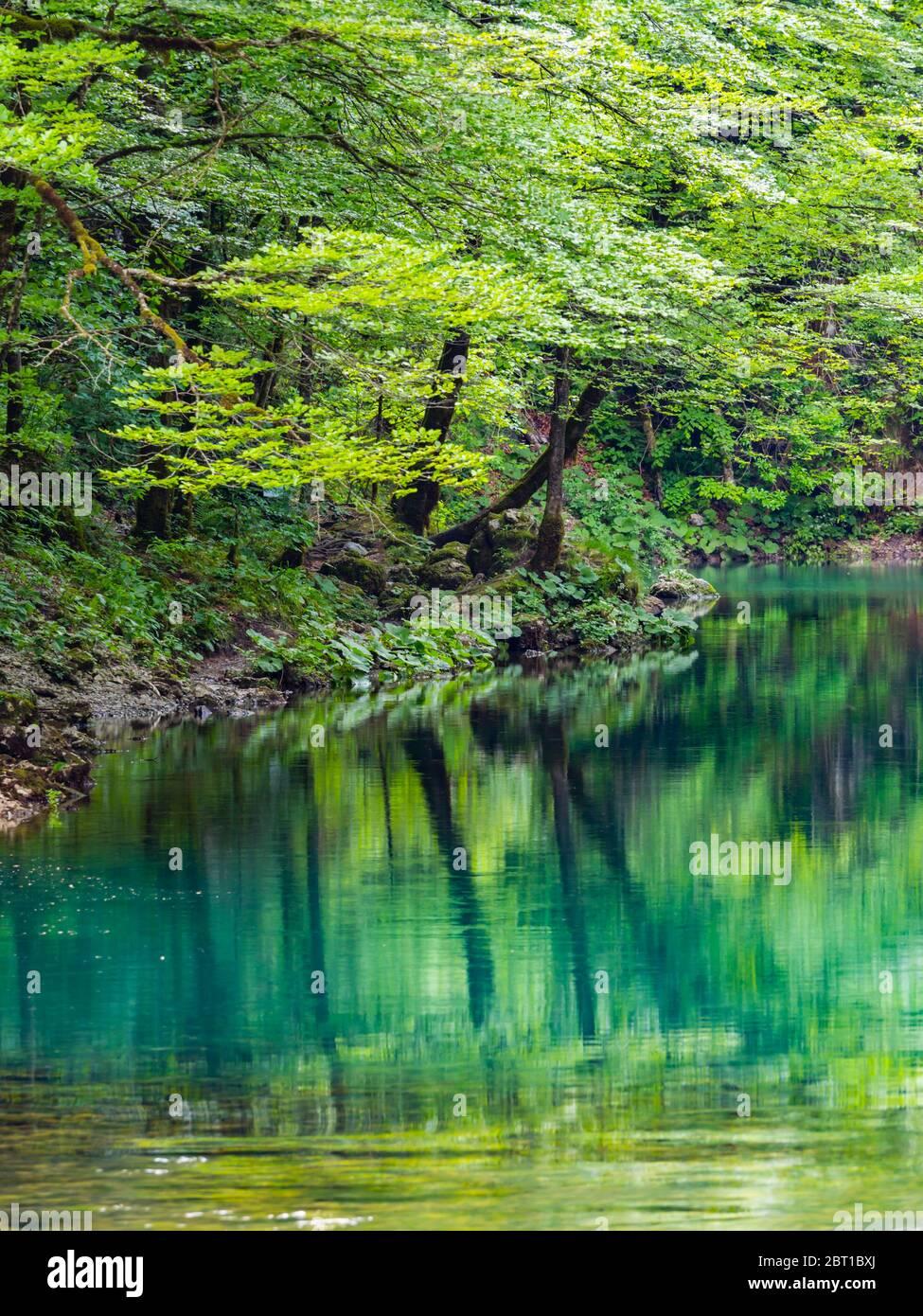Impresionante primavera Verde color natural en el bosque cerca de la fuente del río Kupa en Croacia Europa Foto de stock