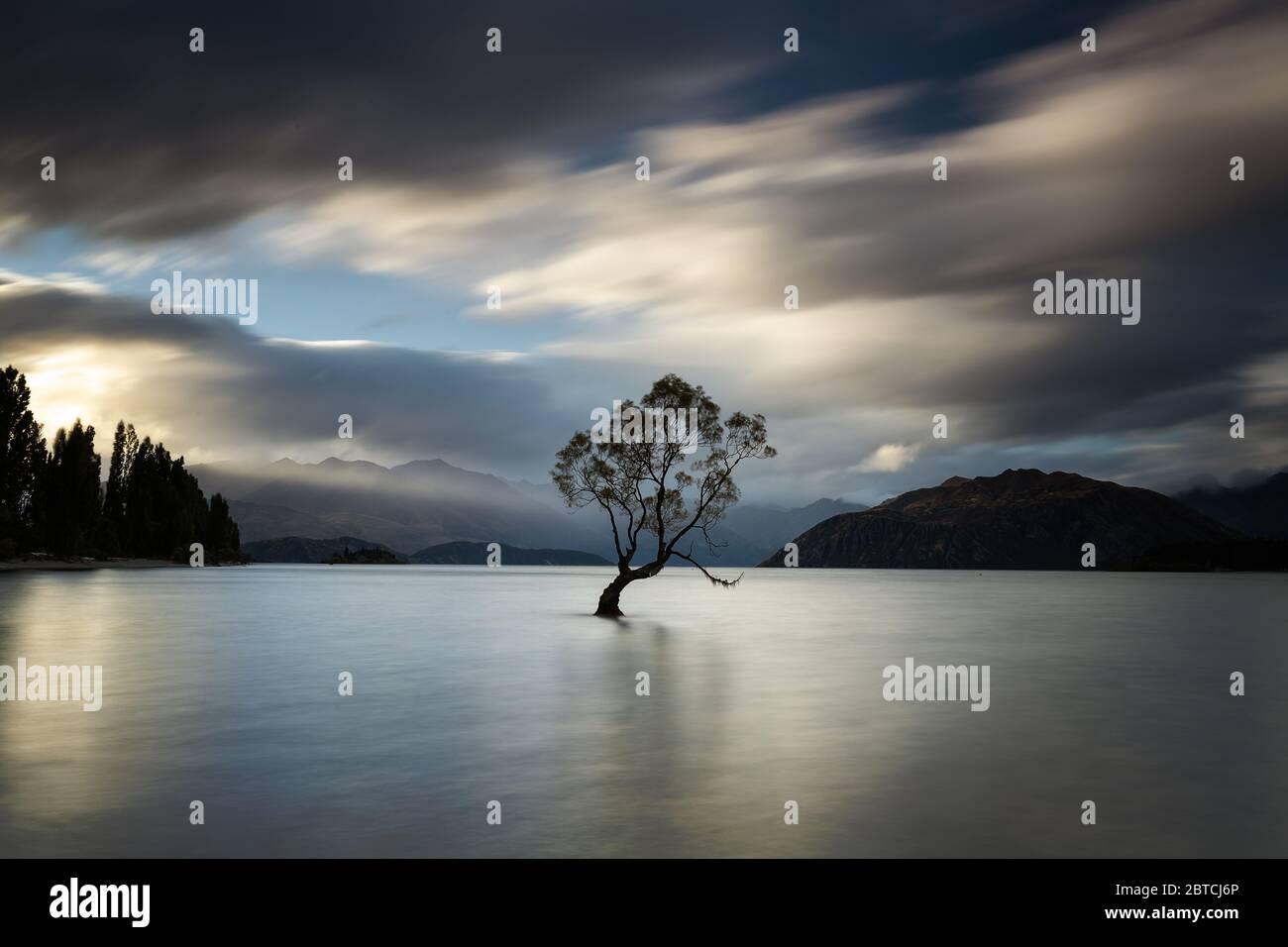 Que Wanaka árbol con un rayo de sol golpeándolo, Wanaka, Nueva Zelanda, marzo de 2020 Foto de stock