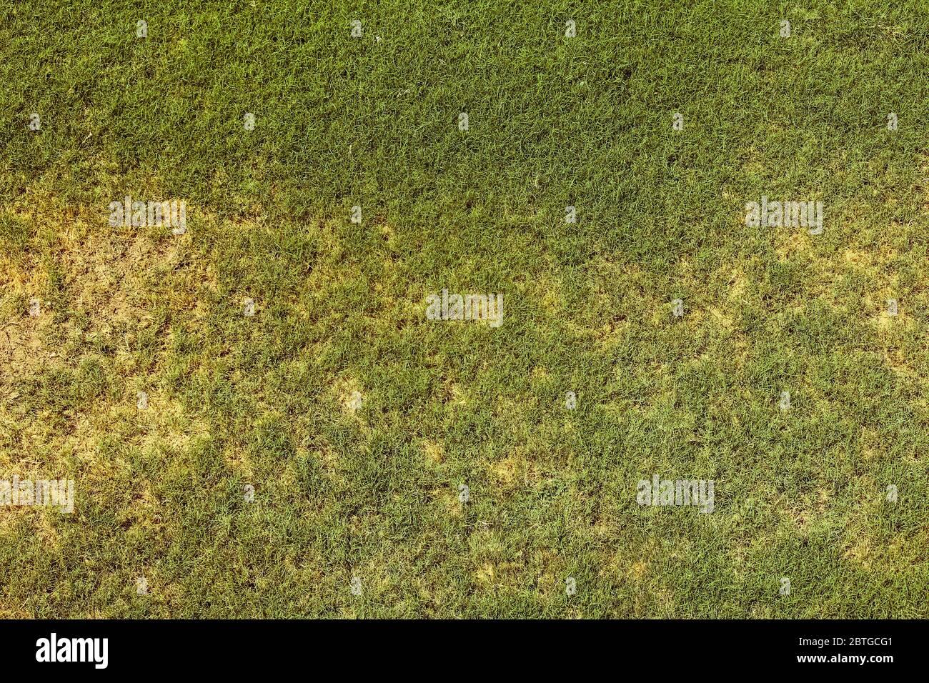 Vista superior del concepto de jardín de césped brillante utilizado para hacer fondo verde, césped para el entrenamiento de campo de fútbol, césped campos de golf césped verde patrón t Foto de stock