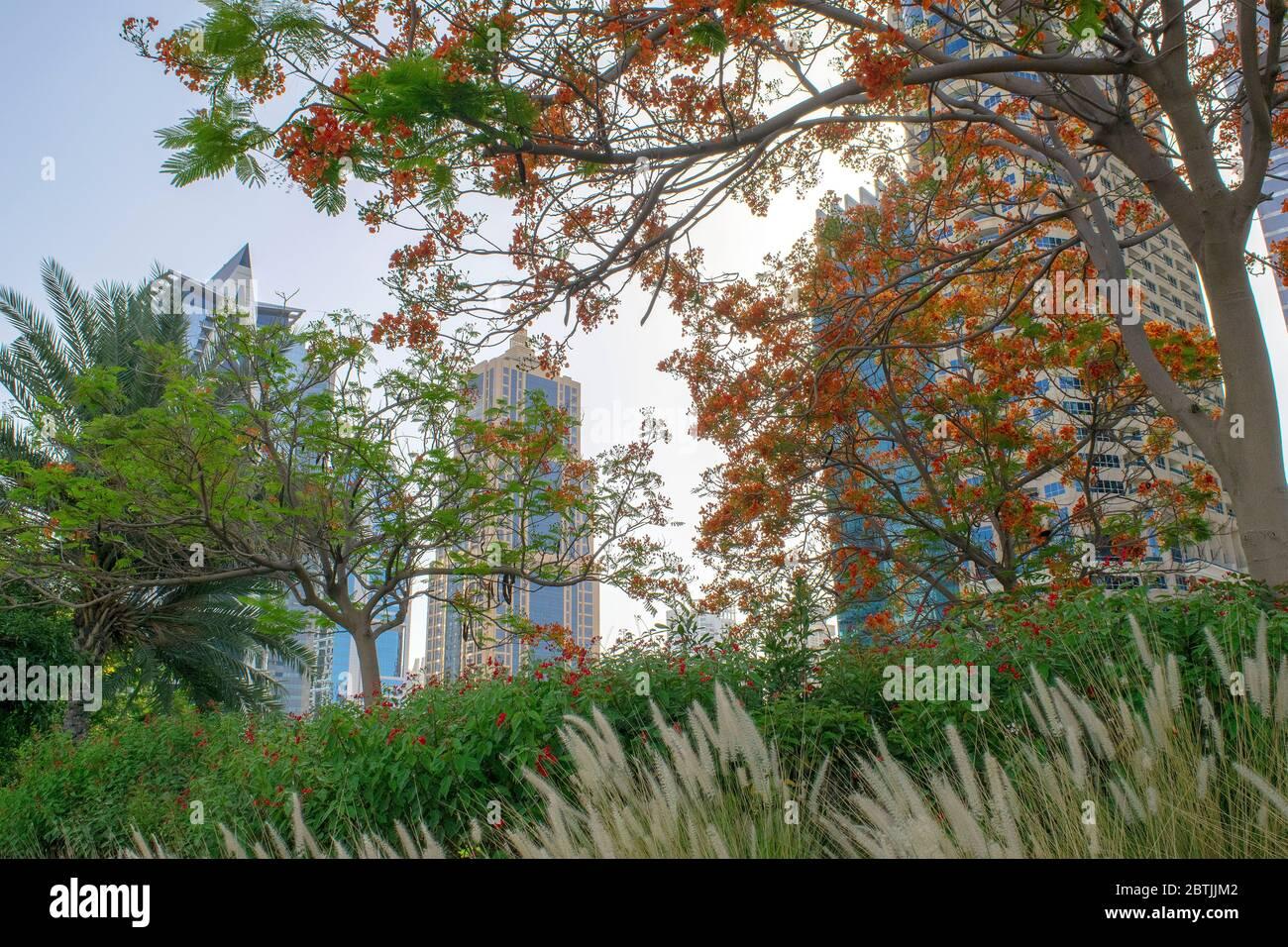 Dubai / EAU - 26 de mayo de 2020: Vista de los rascacielos de Jumeirah Lakes Towers y el parque con muchos árboles verdes. Edificios residenciales en JLT. JLT a través de foliag Foto de stock