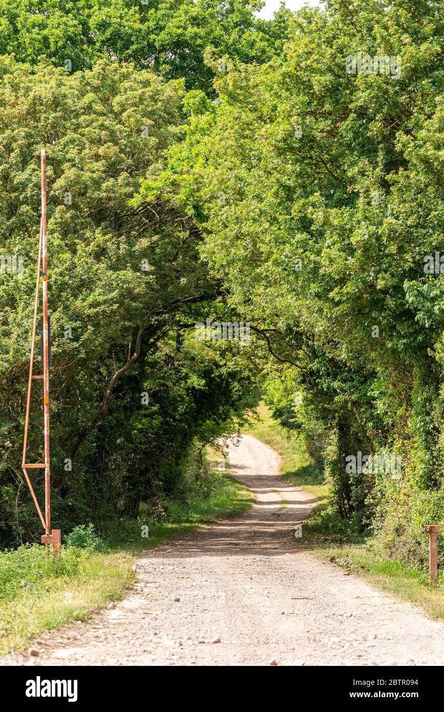 Carril de campo de túnel bordeado de árboles con una antigua barrera oxidada. Área rural cerca de Nayland, Suffolk, Reino Unido. Camino del campo que sale de la vista a través de los árboles Foto de stock