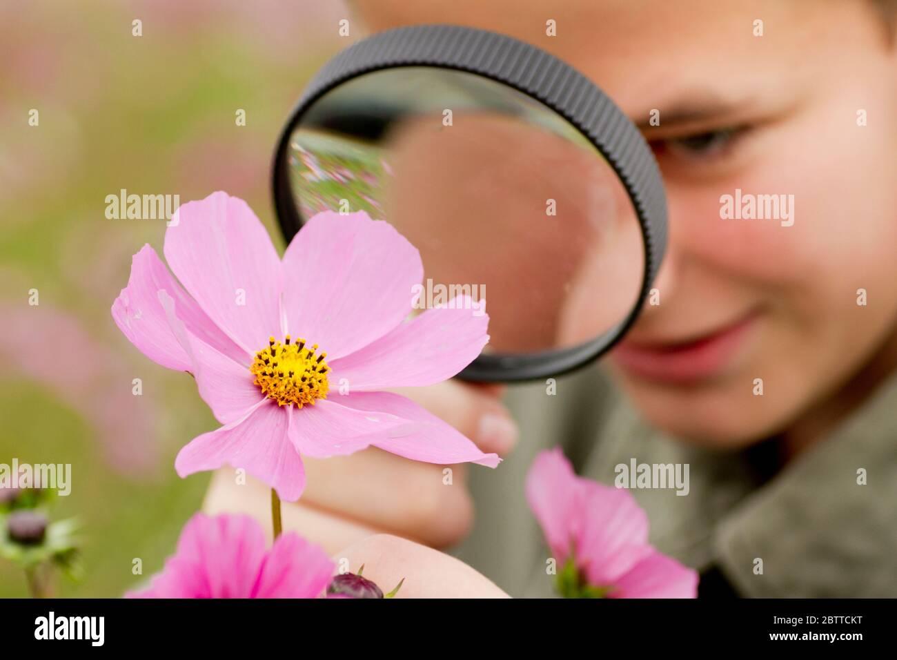 Junge betractet Blume durch eine Lupe, MR: Sí Foto de stock