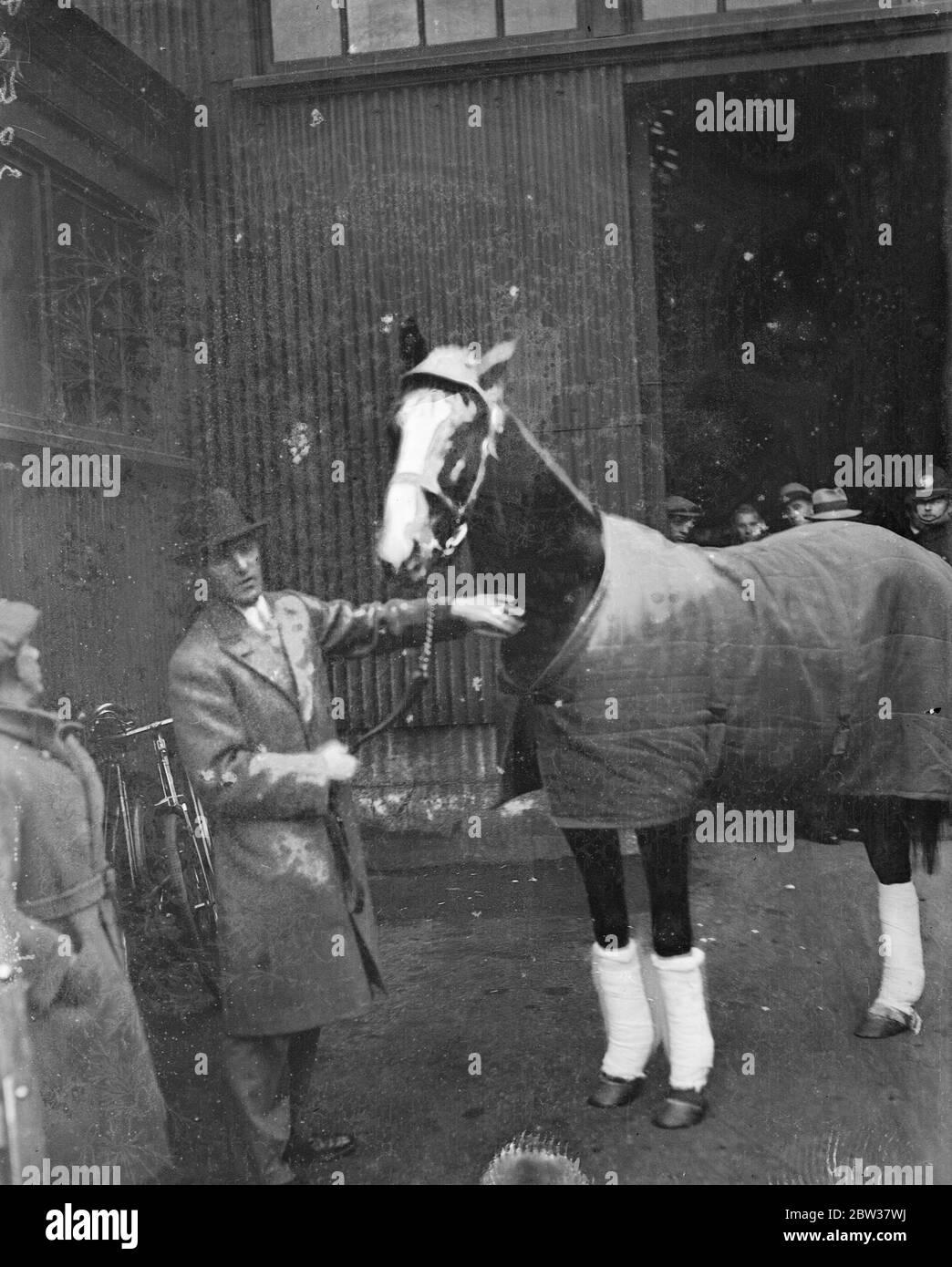 Llega el contendiente americano para la Copa de Oro Ascot, traído por el Sr. A C Bostwick . El Sr. A C Bostwick , el mayor de los hermanos Bostwick , que ha montado en Gran Bretaña con éxito bajo las reglas nacionales de caza llegó a Southampton a bordo del Berengaria . Él trajo consigo su caballo de la Copa de Oro de Ascot, Mate . Mate ha ganado muchas de las razas importantes en América y es considerado uno de los mejores caballos enviados a Gran Bretaña desde los Estados durante la última década. Muestra de fotos ; Mr A C Bostwick con Mate a la llegada a Southampton . 22 de diciembre de 1933 Foto de stock