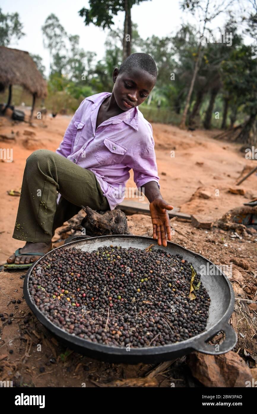 África, África Occidental, Togo, Kpalime. Un joven muestra los granos de café en una bandeja Foto de stock
