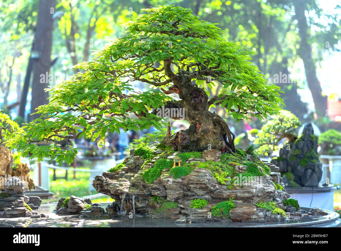 Bonsai y Penjing con miniatura en una bandeja como decir en la vida humana debe ser fuerte aumento, la paciencia superar todos los desafíos para vivir bien y útil a. Foto de stock