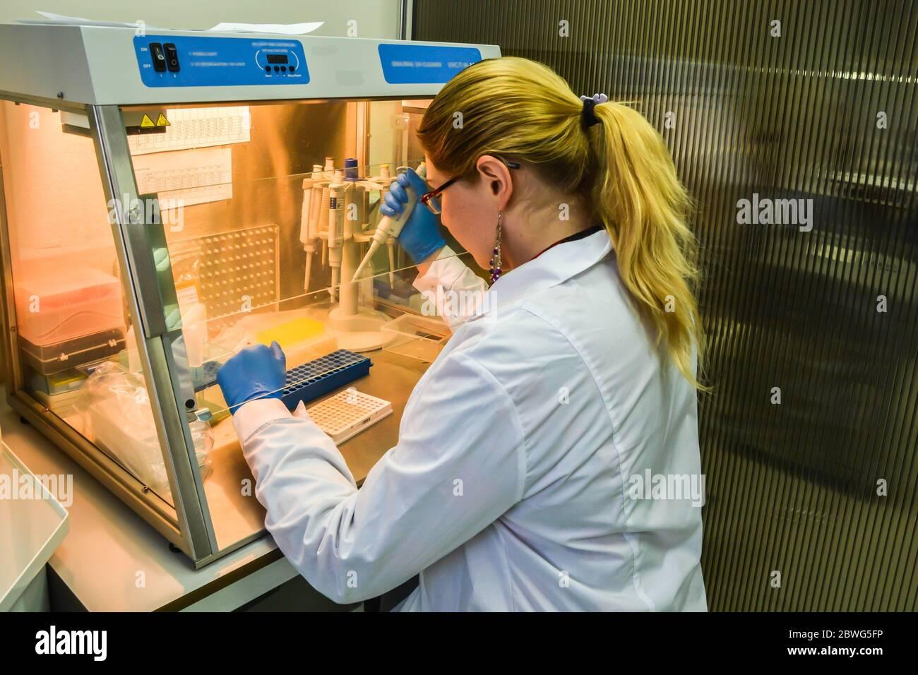 Preparación de muestras para el diagnóstico de PCR. El investigador en una caja laminar pipeteó las muestras en una placa de PCR de 96 pocillos. Foto de stock