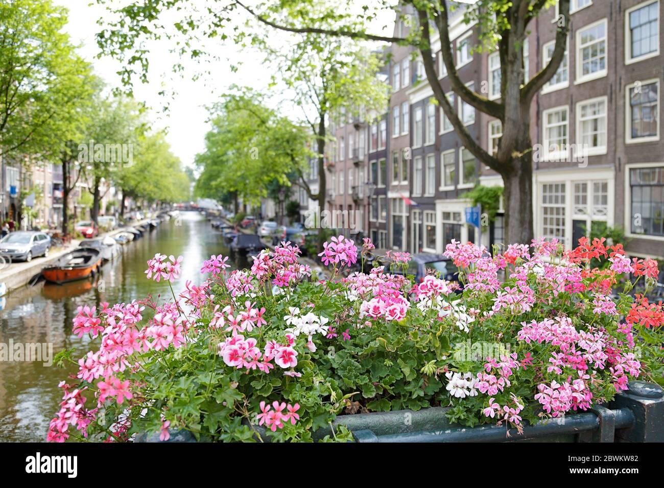 Vista de los edificios hermosos y el canal desde un puente con flores, Amsterdam, los países Bajos Foto de stock