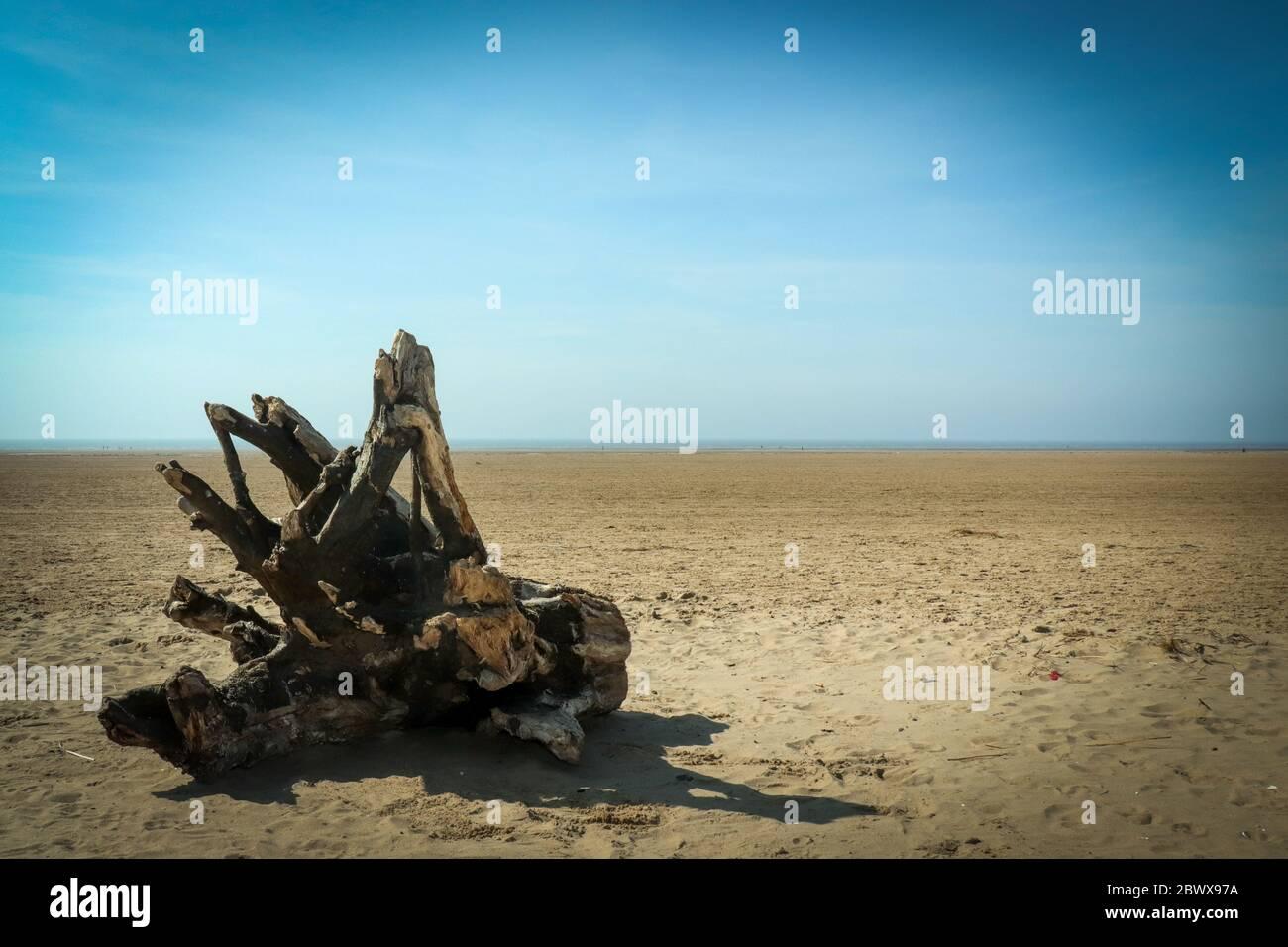 Driftwood en la playa Foto de stock