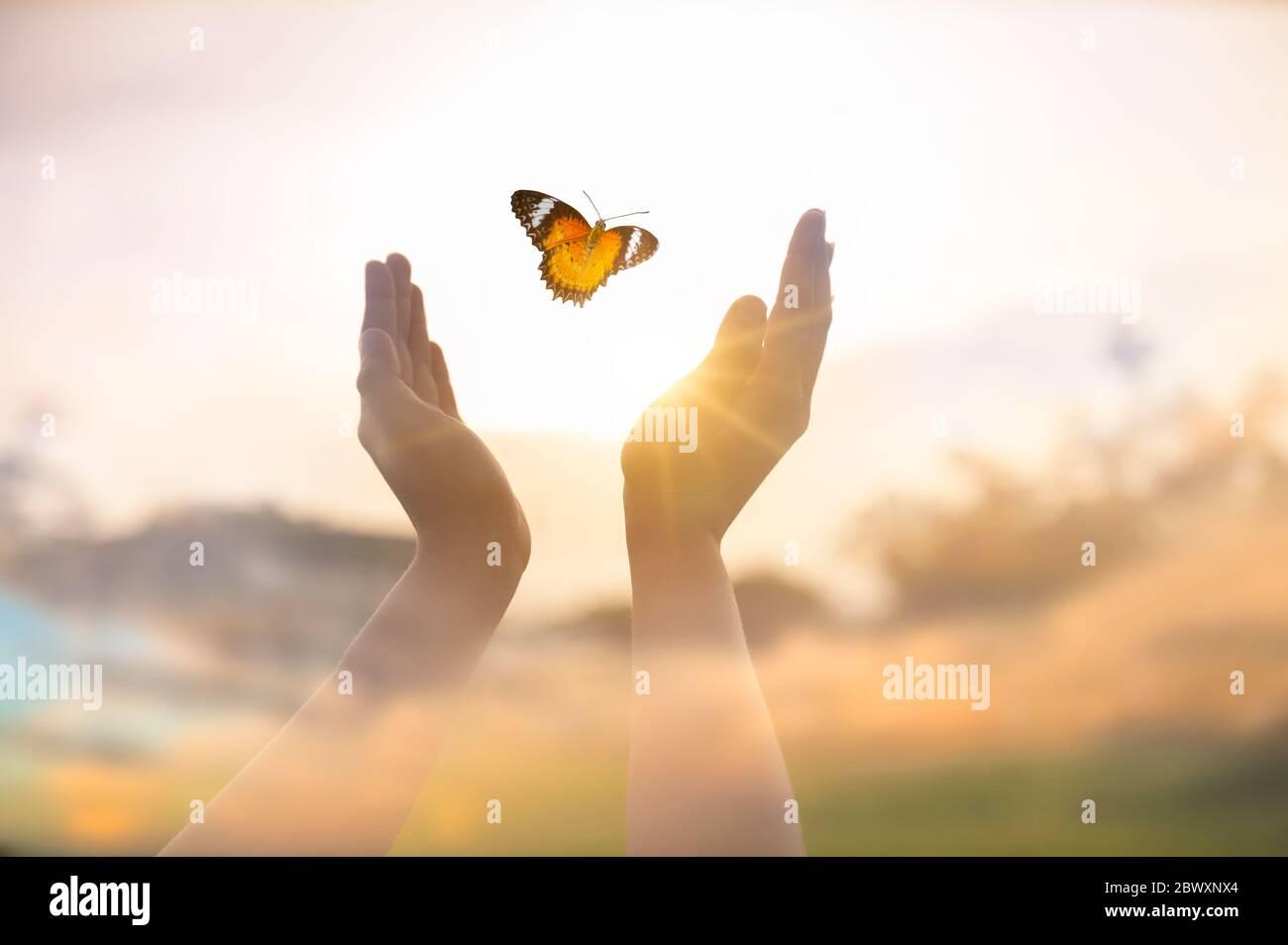 La chica libera a la mariposa desde el momento concepto de libertad Foto de stock