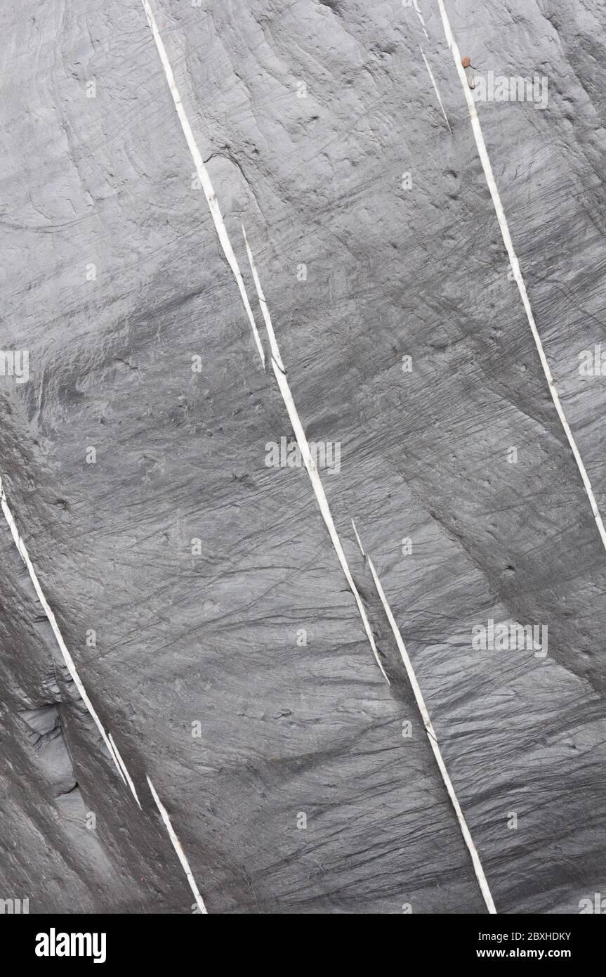 Tres líneas blancas rotas de cuarzo incrustado corren en paralelo a través de una roca gris húmeda. Foto de stock