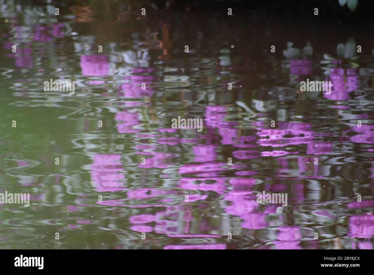 Reflejos púrpura y verde en estanque Foto de stock