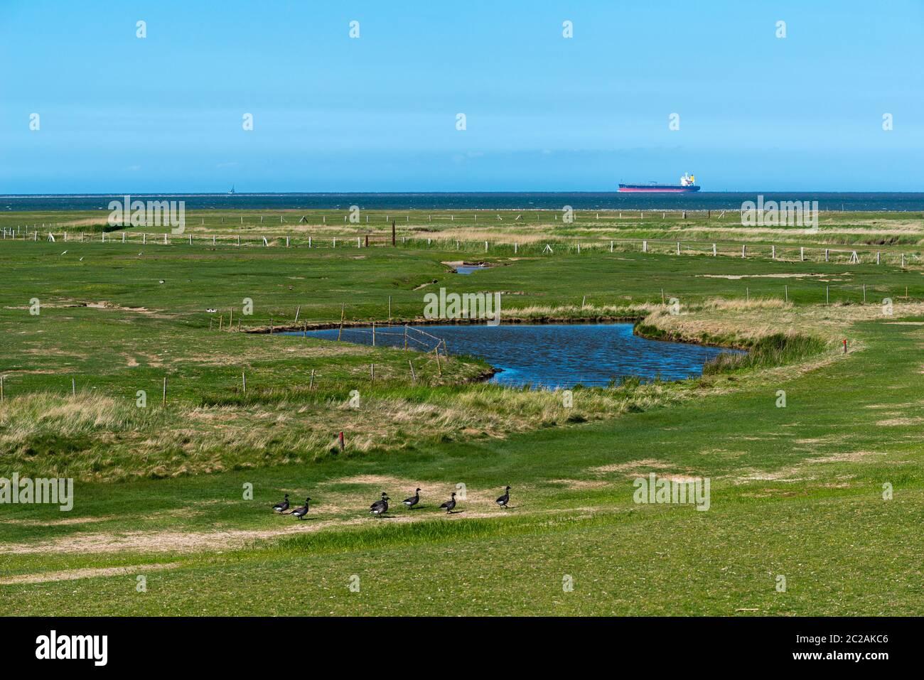 Isla de Neuwerk, Mar del Norte, en el Mar de Wadden, Estado Federal de Hamburgo, Patrimonio de la Humanidad de la UNESCO, Zona II del Parque Nacional, Alemania del Norte, Europa Foto de stock
