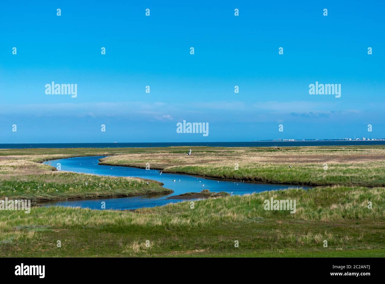 Isla de Neuwerk, Mar del Norte, en el Mar de Wadden, Estado Federal de Hamburgo, Patrimonio de la Humanidad de la UNESCO, Zona I del Parque Nacional, Alemania del Norte, Europa Foto de stock