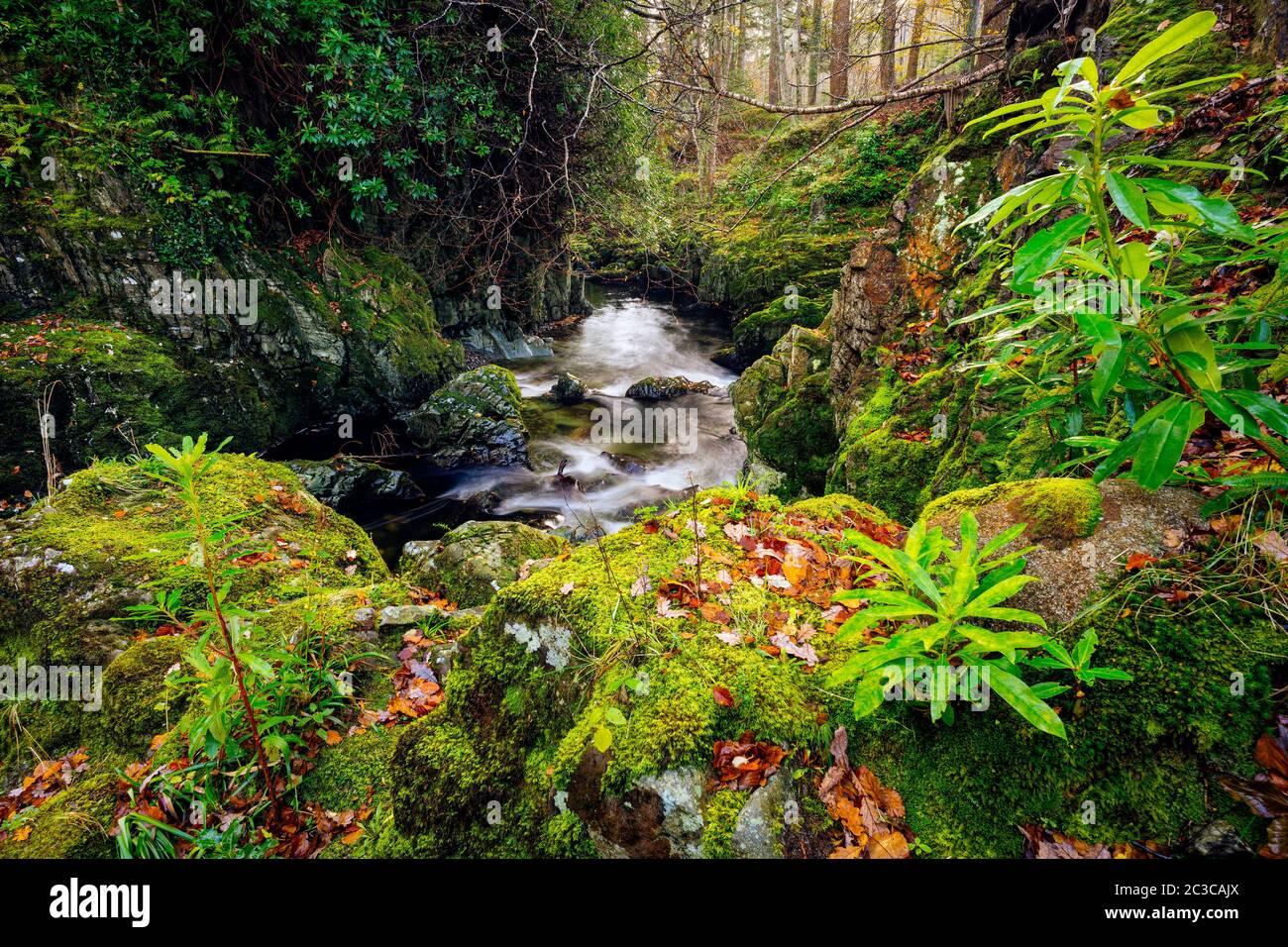 Cascadas y cascadas en arroyo o arroyo de montaña, entre rocas de musgo en el Parque Forestal Tollymore en otoño, Newcastle, County Down, Irlanda del Norte Foto de stock