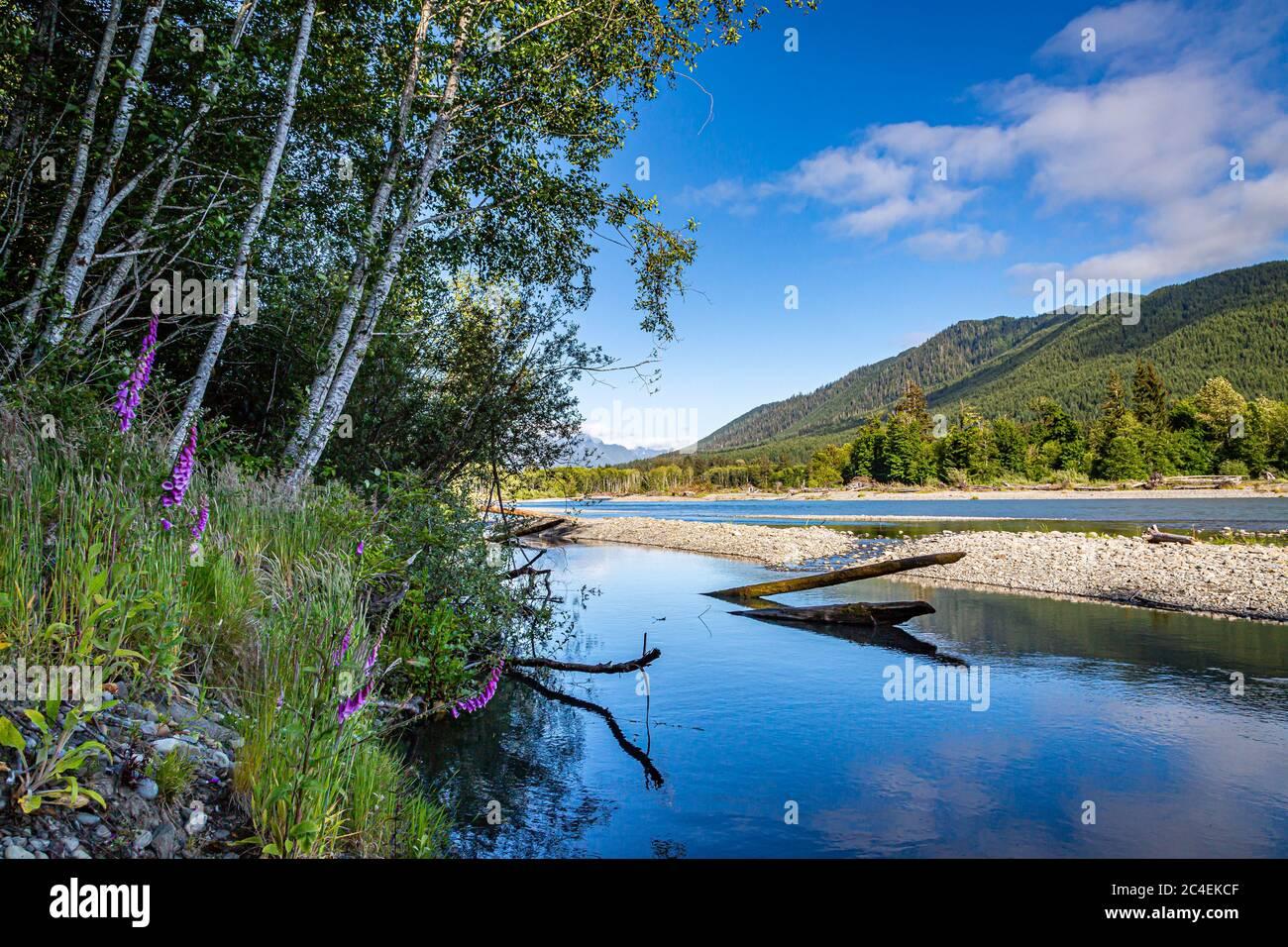 Con vistas al río Hoh en el Parque Nacional Olímpico en el estado de Washington Foto de stock