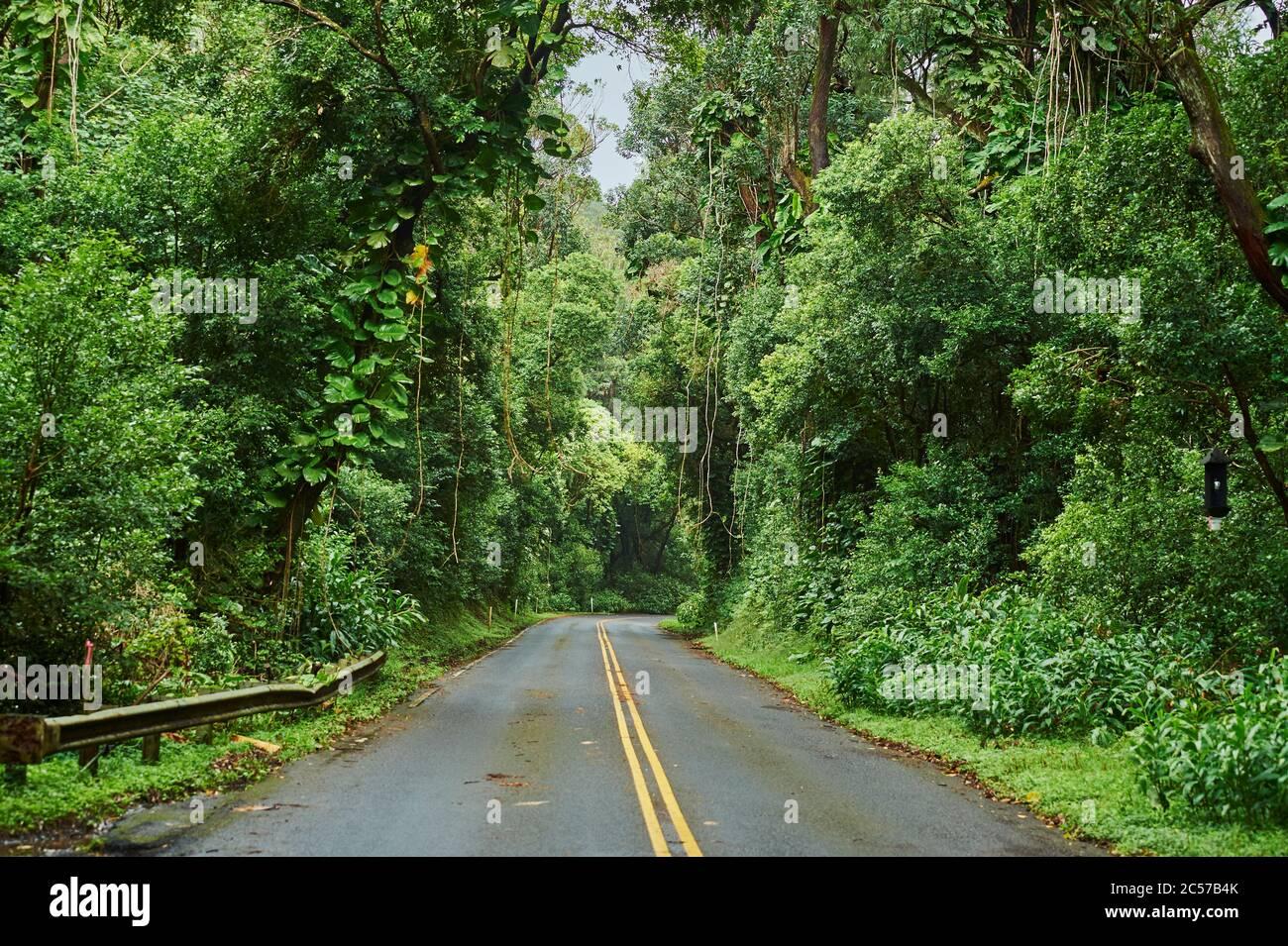Recorra la selva tropical hasta el mirador de Nu'uanu Pali, Nu'uanu Pali, Honolulu, Isla de Oahu, Oahu, Hawaii, estado de Aloha, Estados Unidos Foto de stock