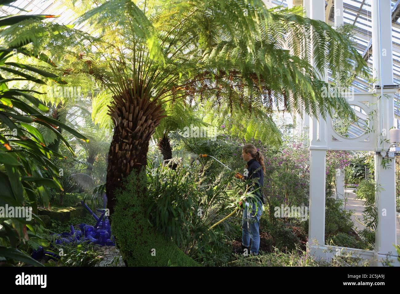 32 instalaciones de arte se situaron en los jardines en una amplia variedad de lugares. A medida que los visitantes entran por Victoria Gate, vieron a Sapphire Star, las formas individuales de vidrio soplado de las cuales se irradiarán hacia afuera para crear una experiencia visual celestial. El vibrante color azul de la estrella zafiro está muy concentrado en el centro, donde los elementos de vidrio individuales se encuentran y se vuelven cada vez más opacos. Las puntas acromáticas translúcidas de la obra reflejan la luz y añaden un intenso resplandor. La obra de Chihuly ha sido expuesta en más de 240 museos alrededor del mundo en su carrera de 50 años. Foto de stock