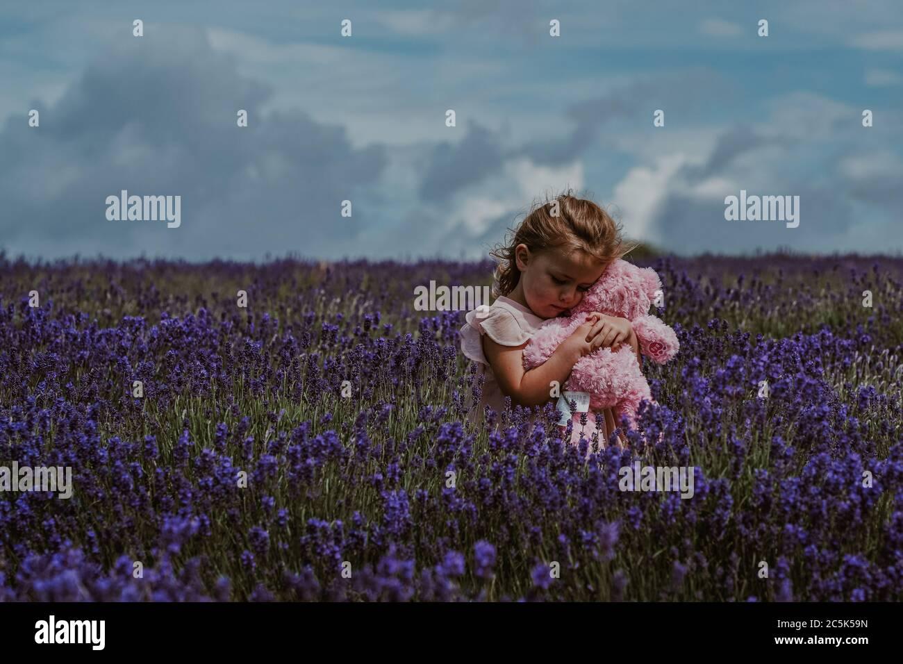 Niña en Lavender Field, Reino Unido Foto de stock