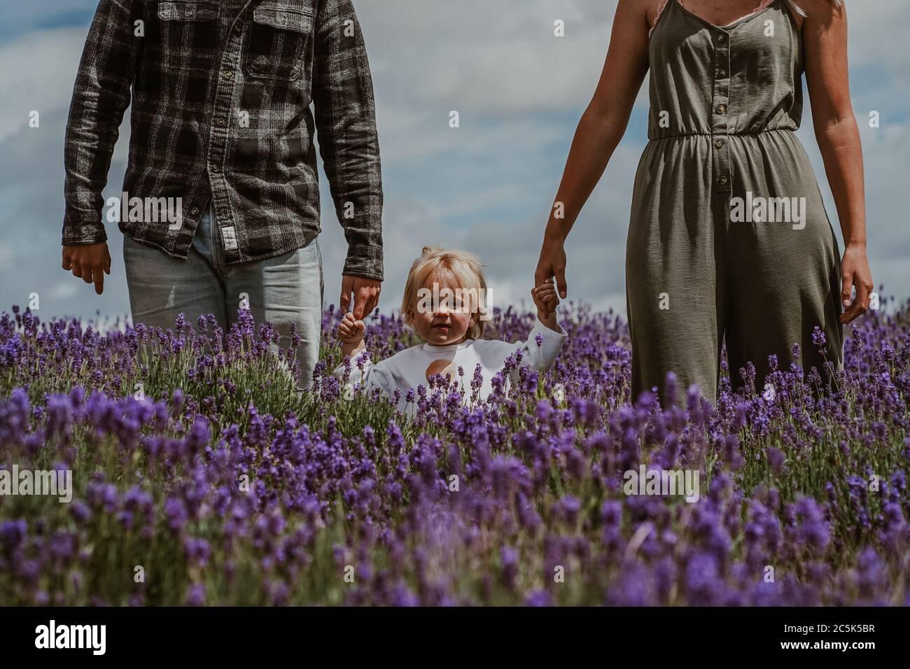 Madre, Padre e Hijo en Lavender Field, Reino Unido Foto de stock