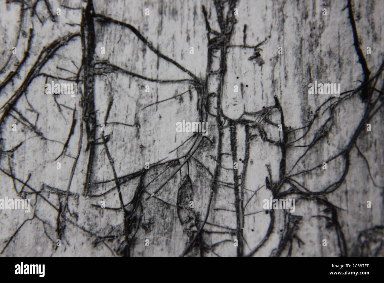 Fotografía de estilo de vida en blanco y negro de la época de los 70 de un patrón natural se convirtió en una idea y noción abstractas. Foto de stock