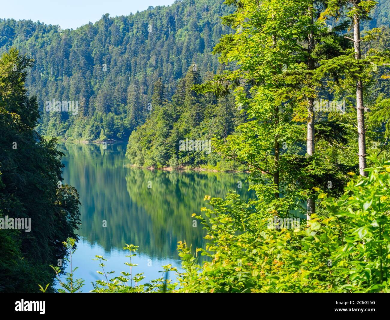 Majestuoso Bosque verde mañana calma calma serenidad espejo imágenes reflejo a lo largo de la costa Lokve lago Lokvarsko jezero Croacia Europa Foto de stock