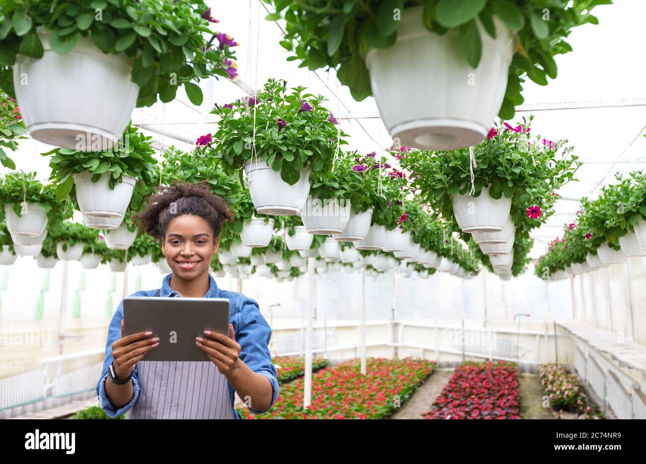 Jardinero y trabajo en invernadero. Chica con tableta digital en las manos, se encuentra en plantación de flores y macetas de plantas colgando del techo Foto de stock