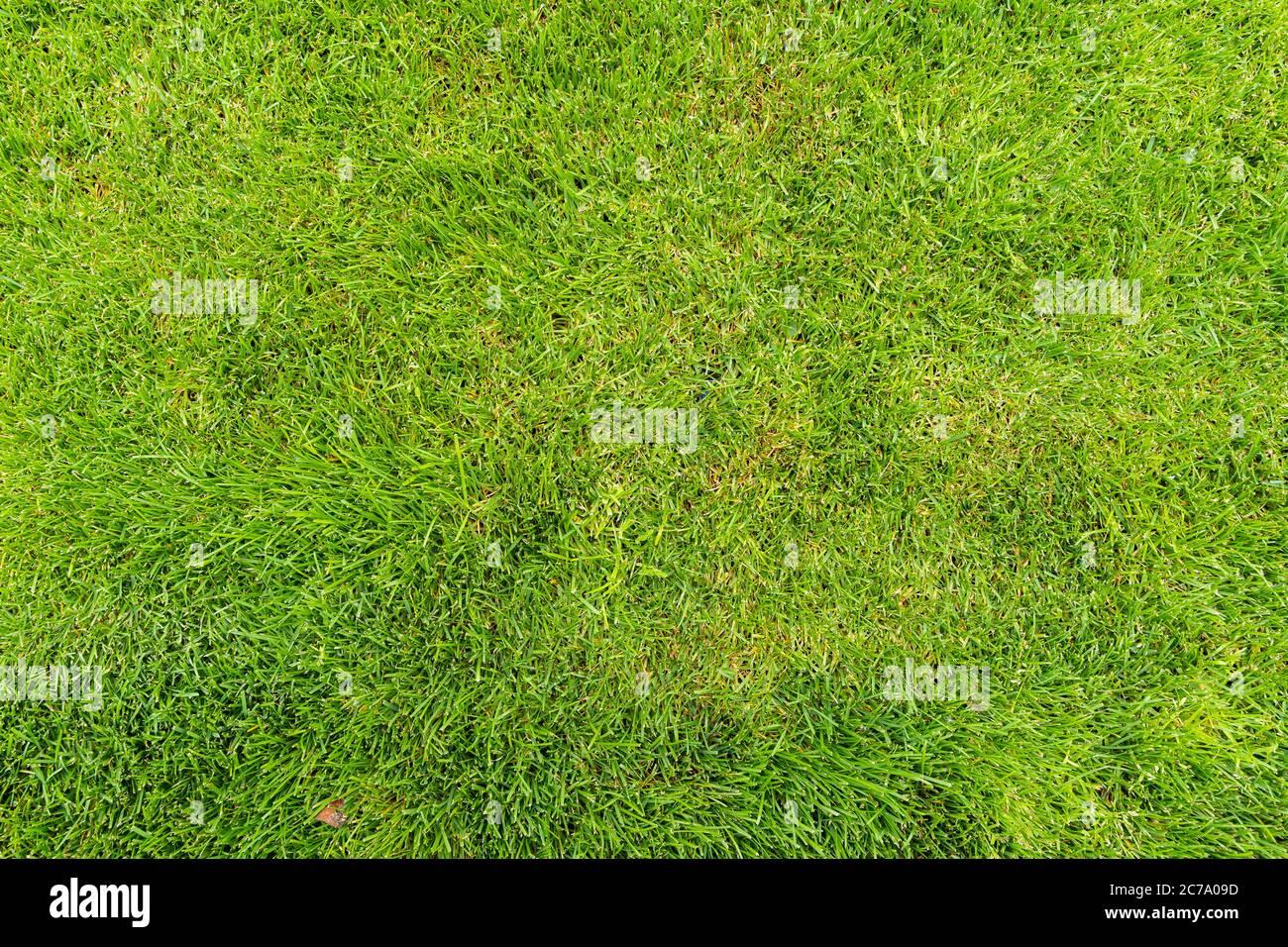 Césped para un campo de fútbol de entrenamiento, campos de golf césped patrón texturizado. Foto de stock