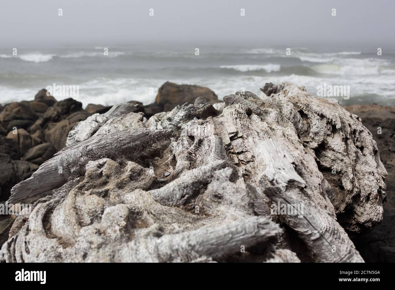 Driftwood a lo largo de la costa en Yachats, Oregon, EE.UU. Foto de stock