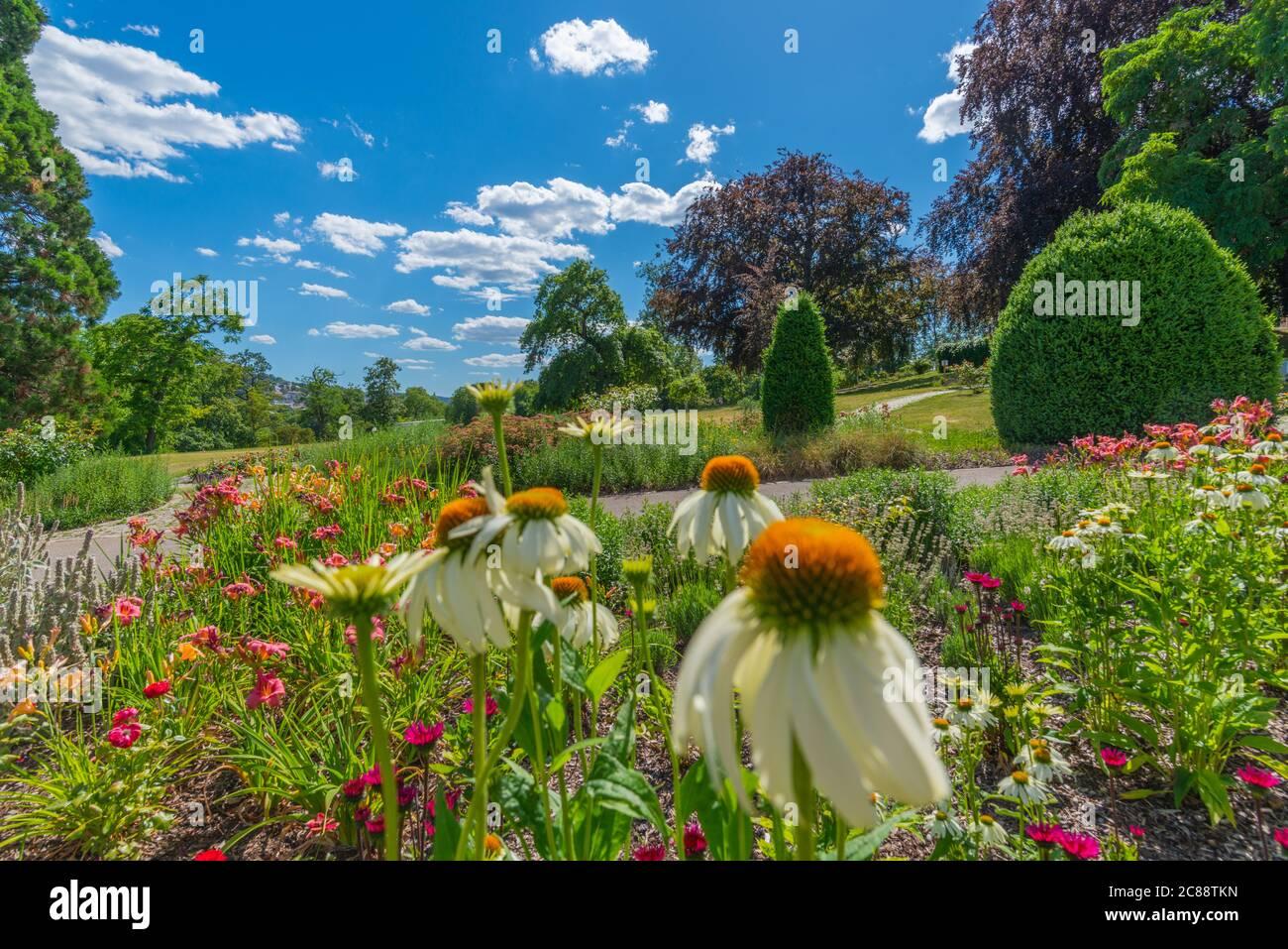 Camas de flores en Rosensteinpark o Parque Rosenstein, Distrito de la Ciudad de Bad Cannstatt, Ciudad de Stuttgart, Baden-Württemberg, Alemania del Sur, Europa Central Foto de stock