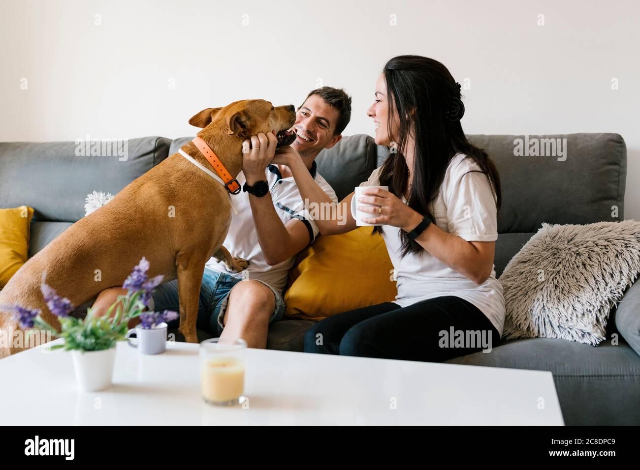 Mimos en pareja con un perro mientras estás sentado en un sofá en casa Foto de stock