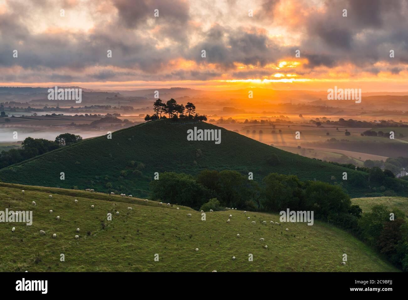 Bridport, Dorset, Reino Unido. 30 de julio de 2020. El tiempo en el Reino Unido. Un espectacular amanecer en Colmers Hill, cerca de Bridport en Dorset, mientras el sol naciente envía rayos de luz solar brillando a través de las nubes bajas antes de un día de verano caluroso. Crédito de la imagen: Graham Hunt/Alamy Live News Foto de stock