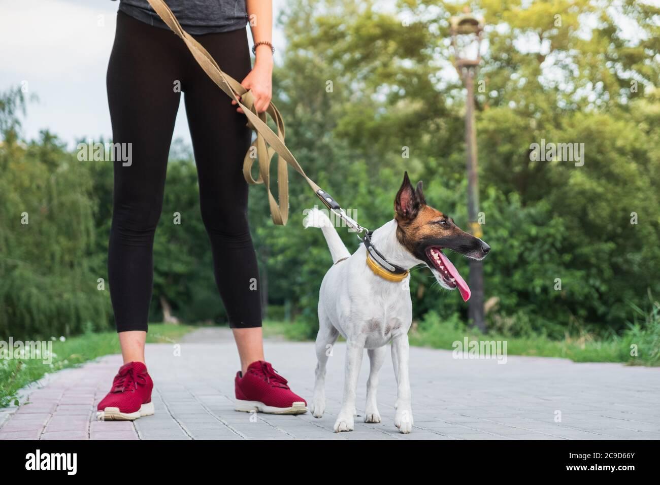 Perro en la correa con jogger. Correr, hacer ejercicio con mascotas, estilo de vida activo en la ciudad, mujer corriendo con su terrier zorro Foto de stock