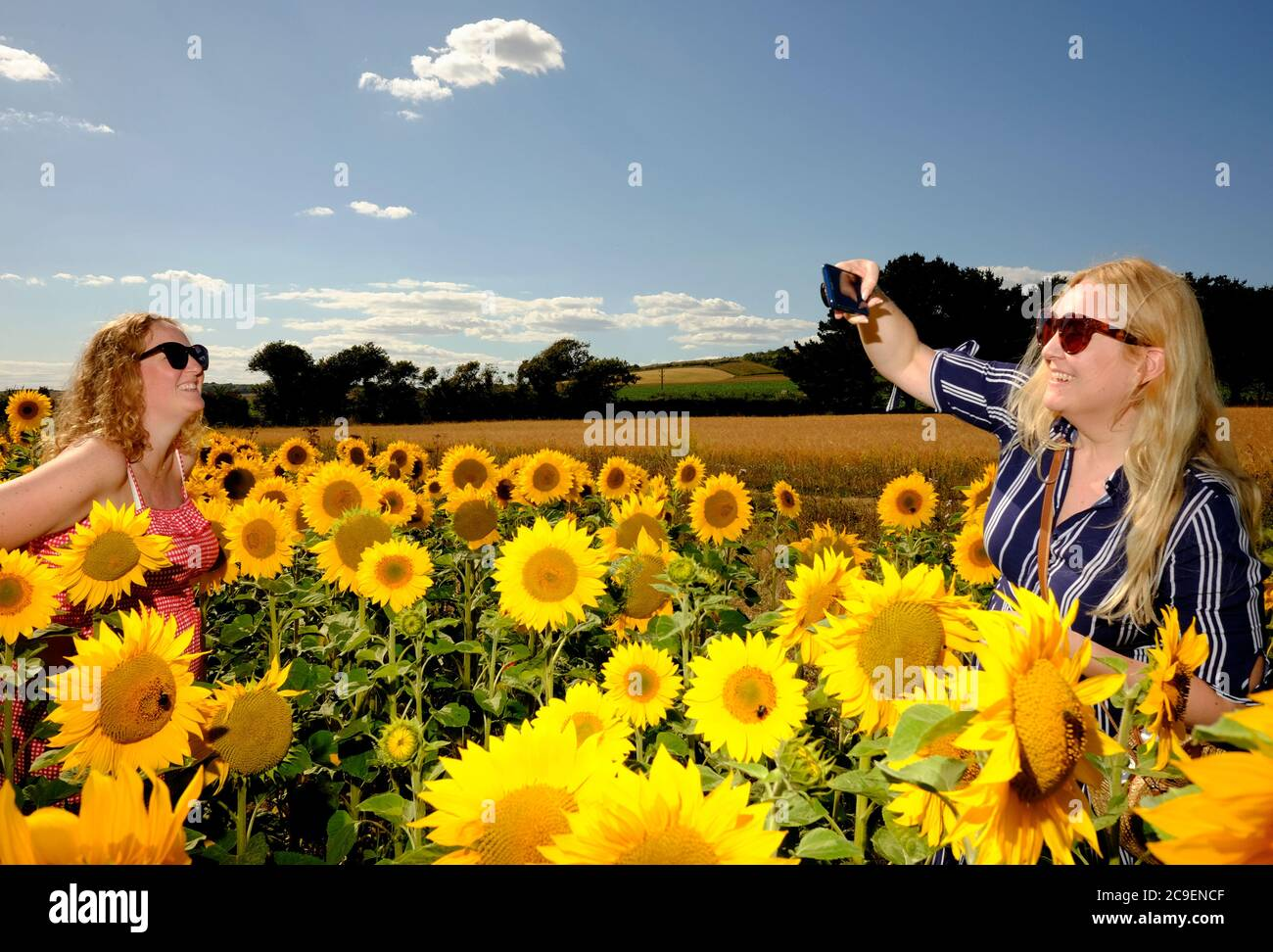Girasoles Mujeres Fotos E Imagenes De Stock Alamy Año tras año, muchos como tú las demandan a medida que se acerca el 8 de marzo. https www alamy es dos mujeres en un campo de girasoles una tomando una foto de la otra ambas sonriendo y divirtiendose image367273775 html