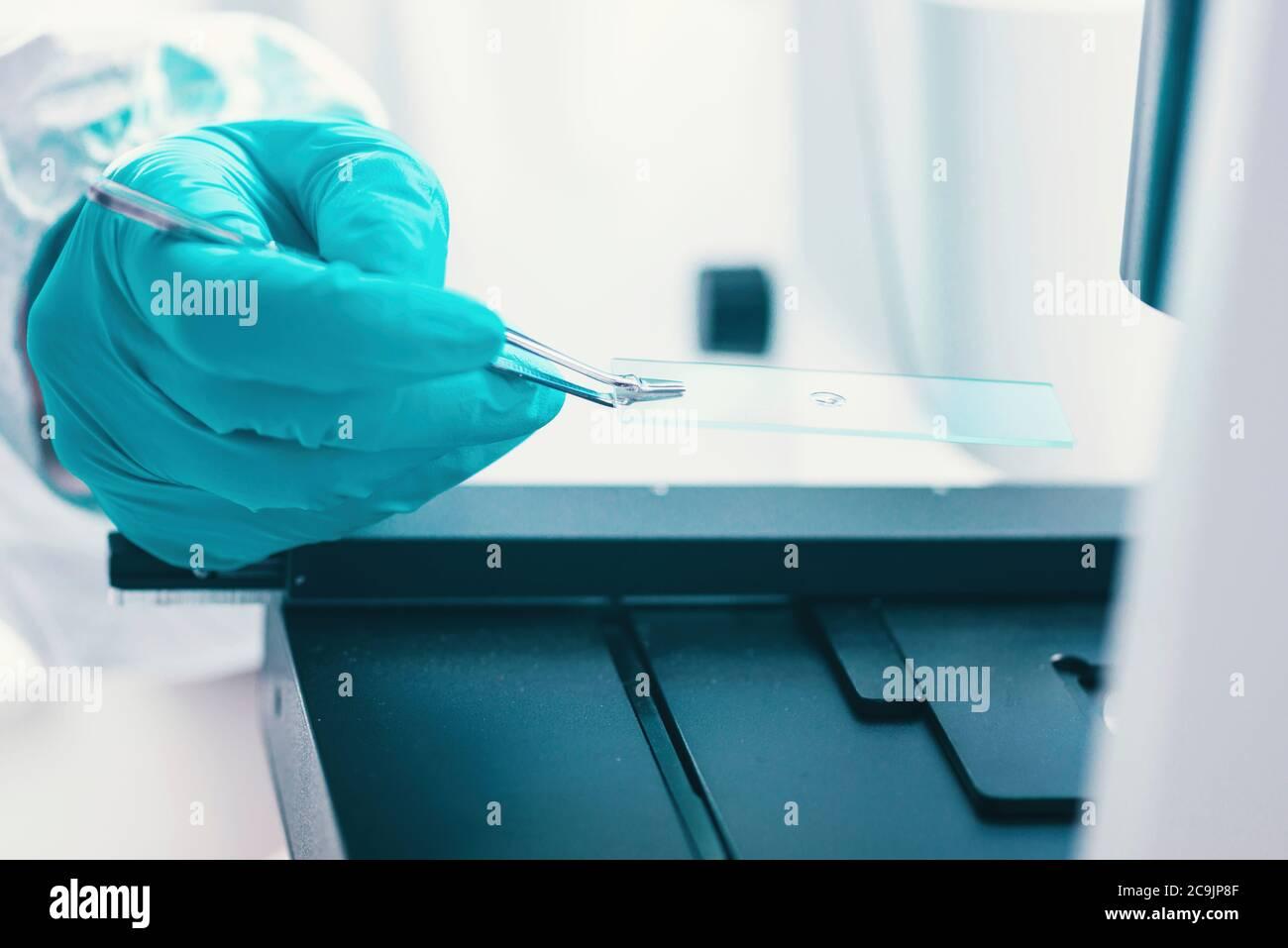Examen de la muestra bacteriana al microscopio. Foto de stock