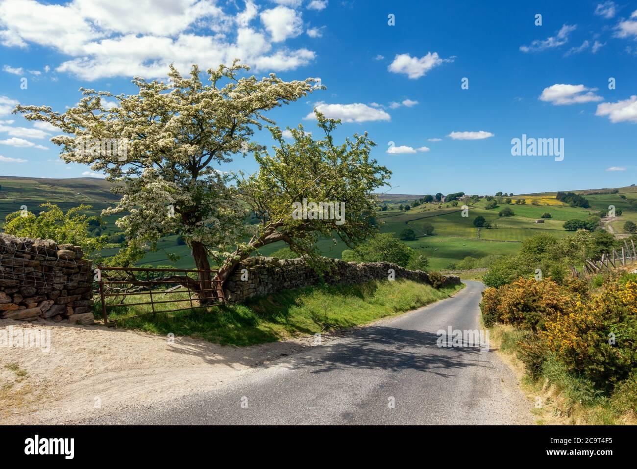 Mirando hacia abajo Colina trampa en Nidderdale con un impresionante árbol de espino en flor y a través de la aldea de Middlesmoor, Yorkshire del Norte, Inglaterra, u Foto de stock
