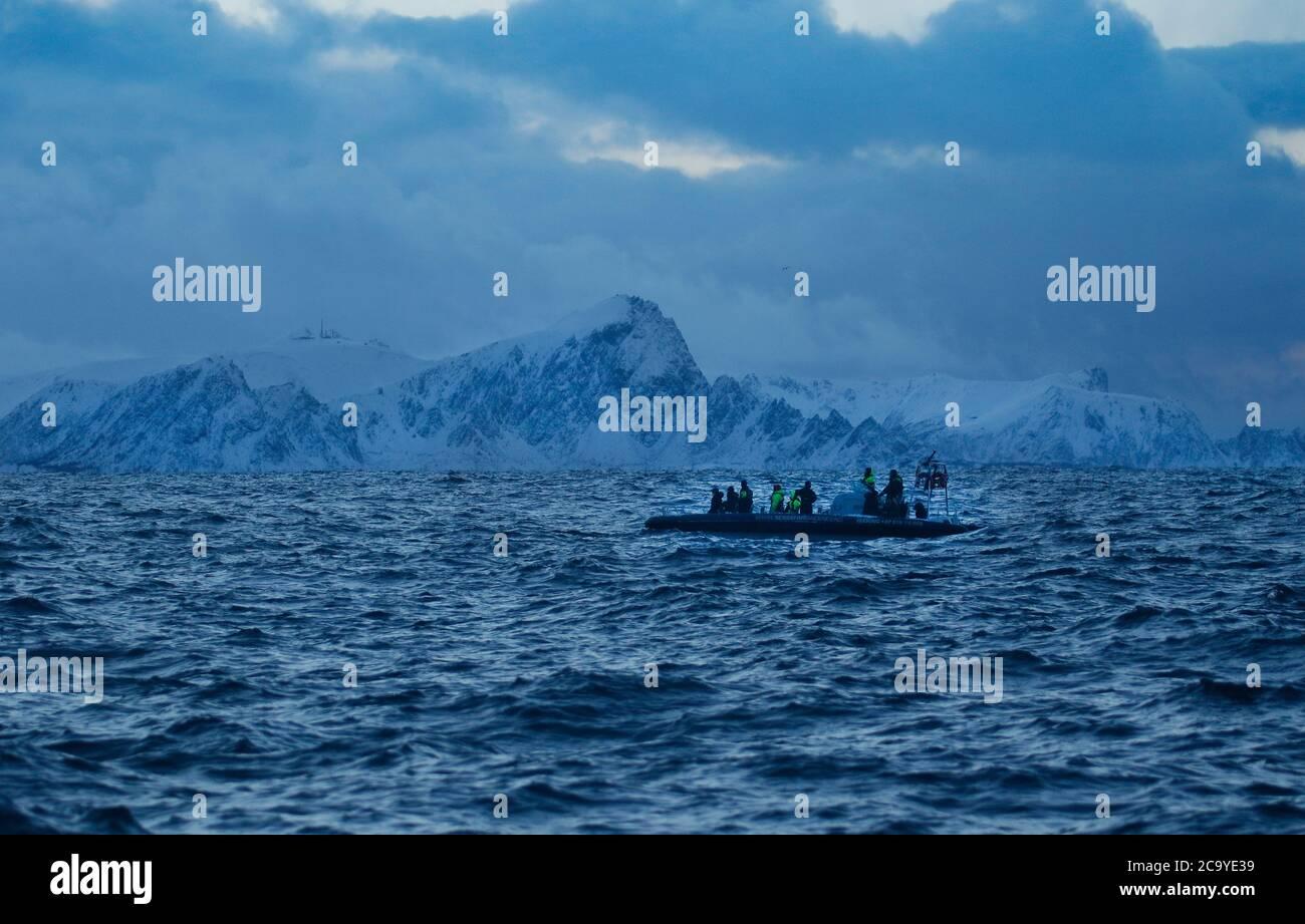 Expedición turística en busca de orcas en Andenes, Isla Andoya, Vesteralen, Noruega, Escandinavia, Europa Foto de stock