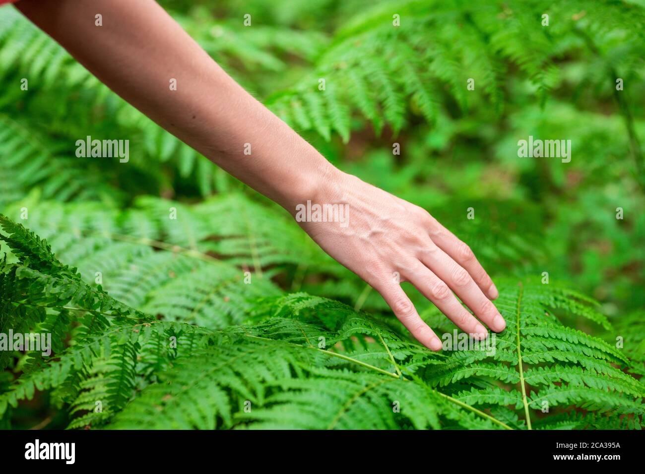 La mano femenina, con los dedos largos y elegantes toca suavemente la planta, las hojas de helecho. Primer plano de una persona irreconocible. Imagen de alta calidad. Foto de stock