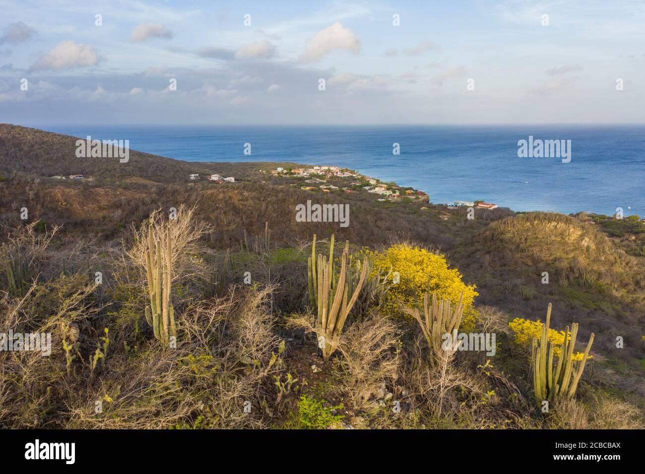 Paisaje con árboles Kibrahacha amarillos en la isla de Curacao / Caribe Foto de stock