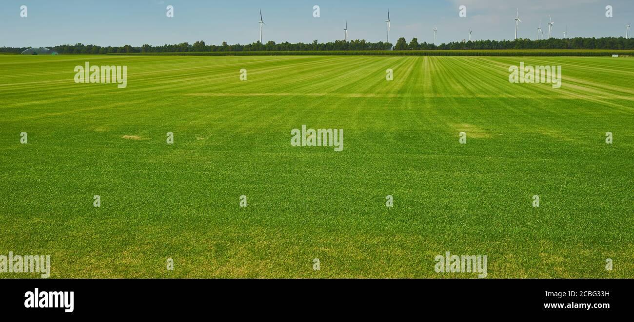 Enorme campo de hierba como una reposición para el césped de campos de golf Foto de stock