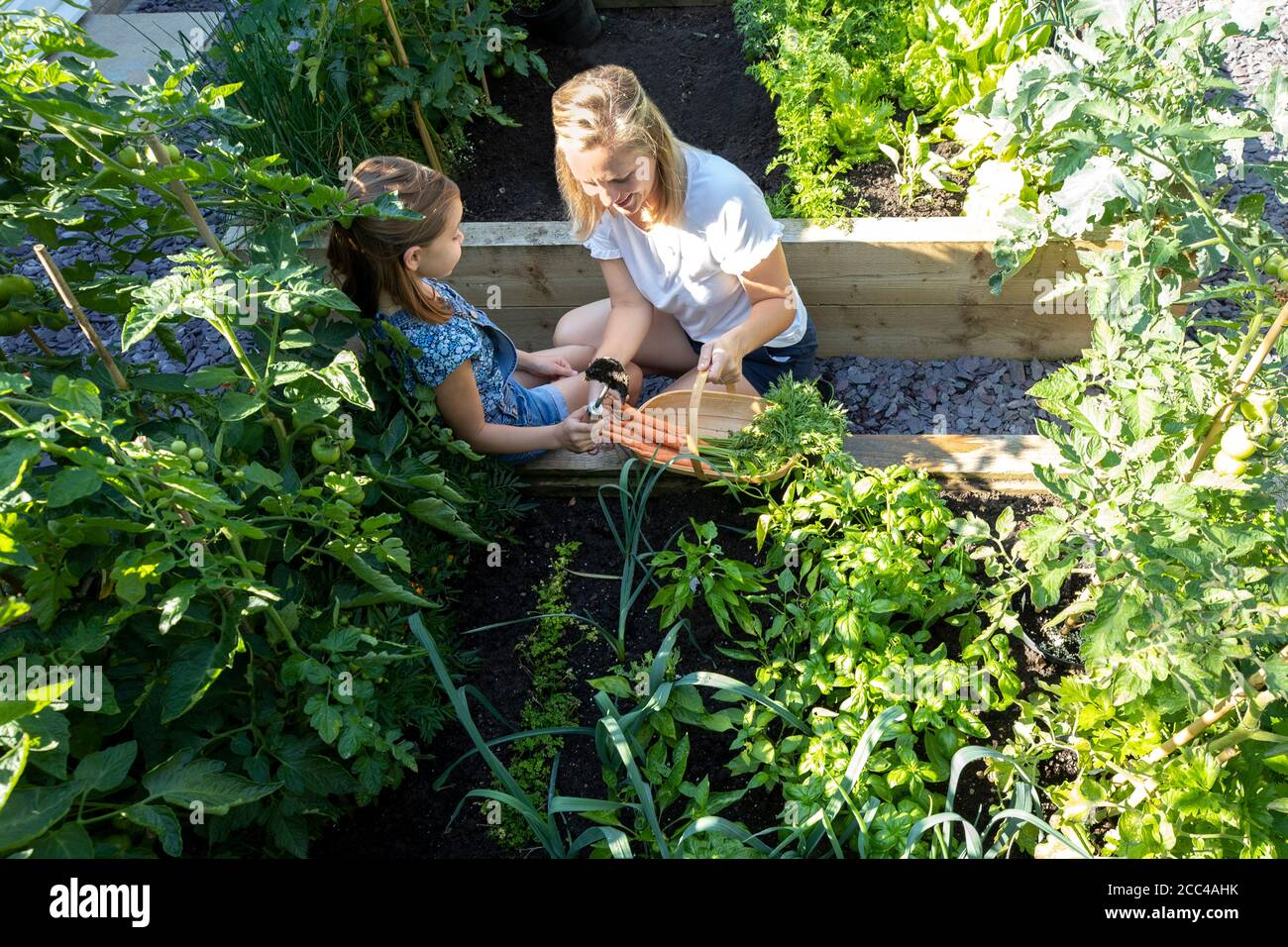 La madre y la hija excavando en las camas de verduras criadas en el hogar Foto de stock
