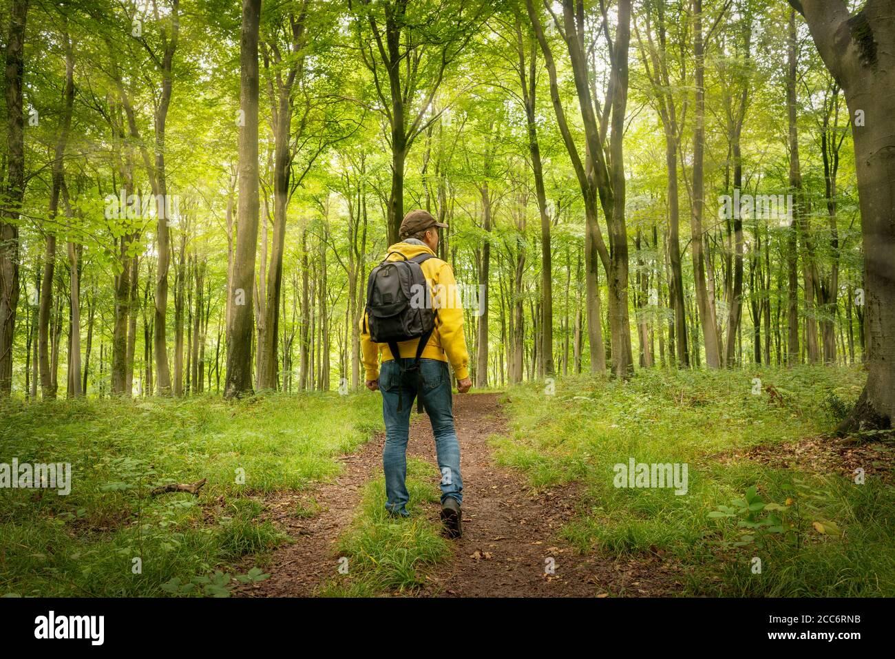 Mochilero macho caminando a través de un bosque arbolado, vista trasera. Foto de stock