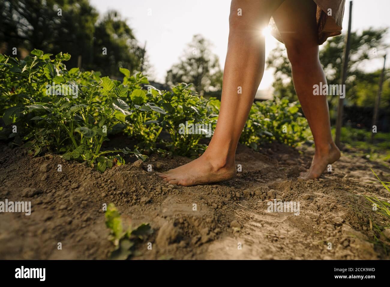 Pies descalzos de una mujer caminando sobre el suelo en una verdura parche Foto de stock