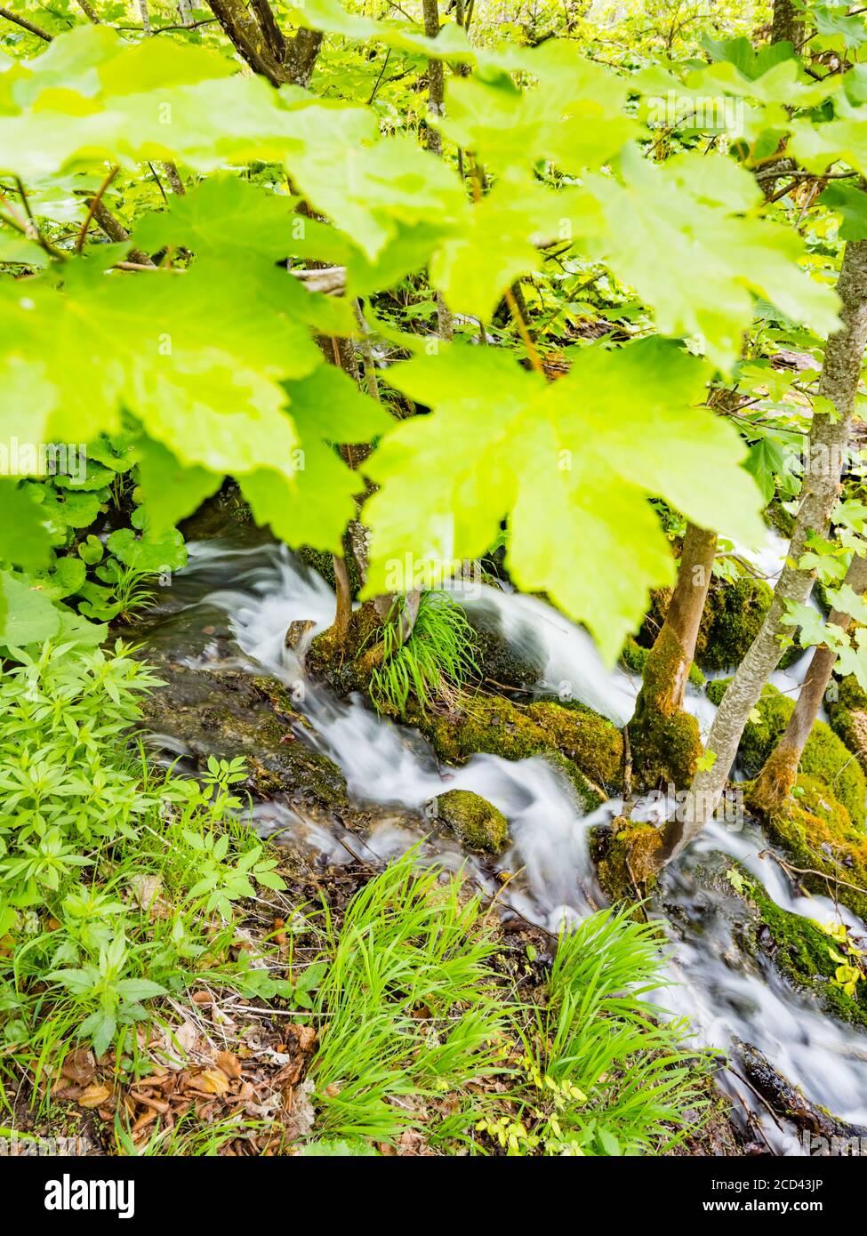 Parque nacional Lagos de Plitvice en Croacia Europa flujo de agua pequeño río serpenteante bajo el dosel de árboles de hojas Foto de stock
