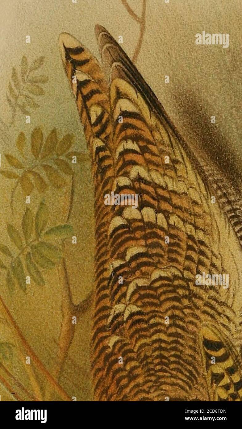 . Diario de la Sociedad de Historia Natural de Bombay . 260 los dientes de los caracoles. Por el mayor A. J. Peile, r.a. (Con una placa) 271 Notas sobre las mariposas indias. Por el capitán W. H. Evans, r. 279 Bombay Natural History Societys Mammal Survey de la India. Por Kathleen V. Byley (con una placa) 283 los Serows, Gorals y Takins de la India Británica y los Asentamientos del Estrecho. Por P. I. Pocock, f.r.s. Parte II. (Con 3 placas de color Golov/rojo y 4 placas sin color) 296 las mariposas comunes de las llanuras de la India. Por T.R. Bell. Parte XIV 320 Lista de Mariposas recogidas por el Capitán F, M.Bailey en China Occidental, Tibe Suroriental Foto de stock