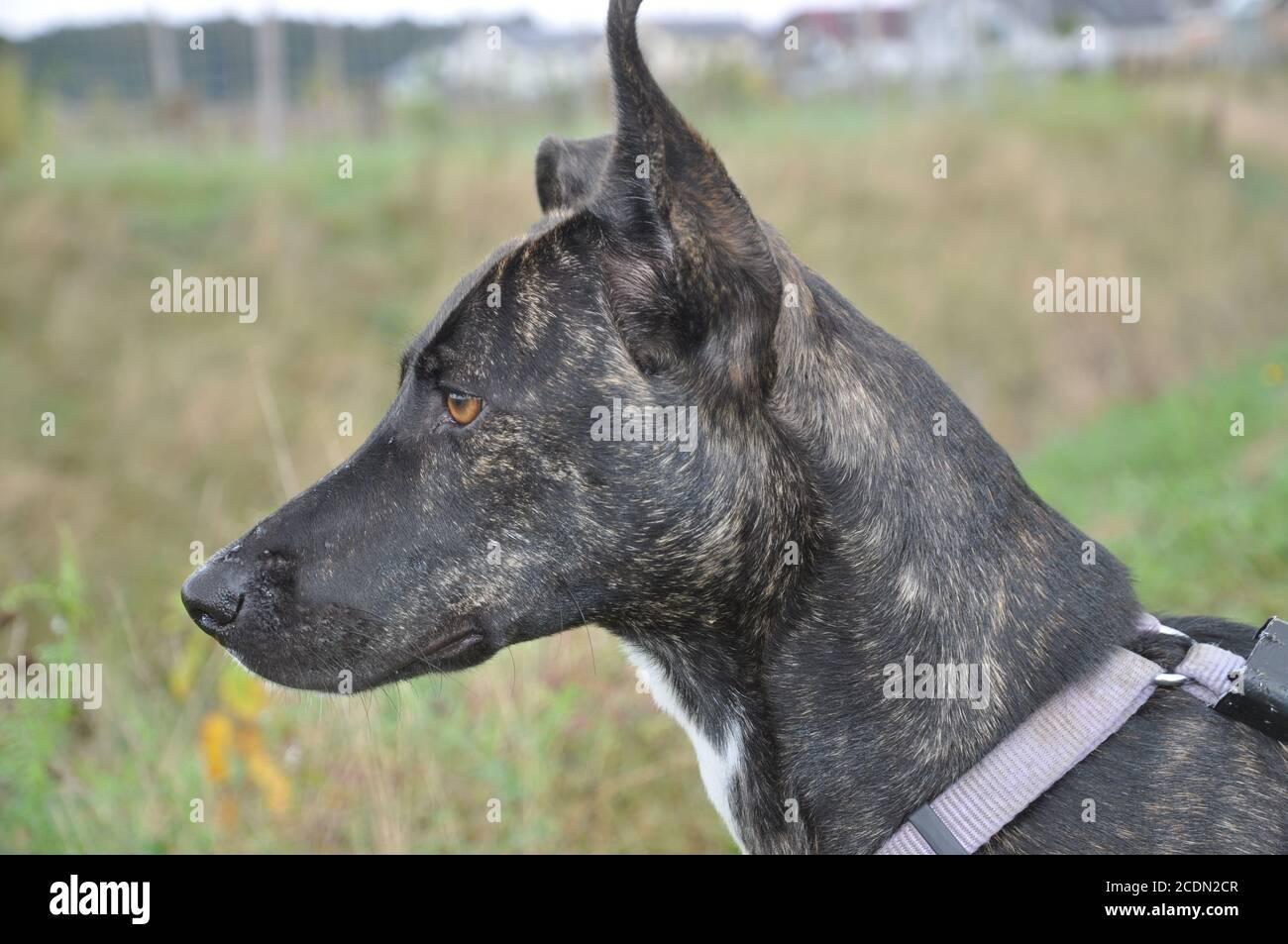 perro hembra Foto de stock