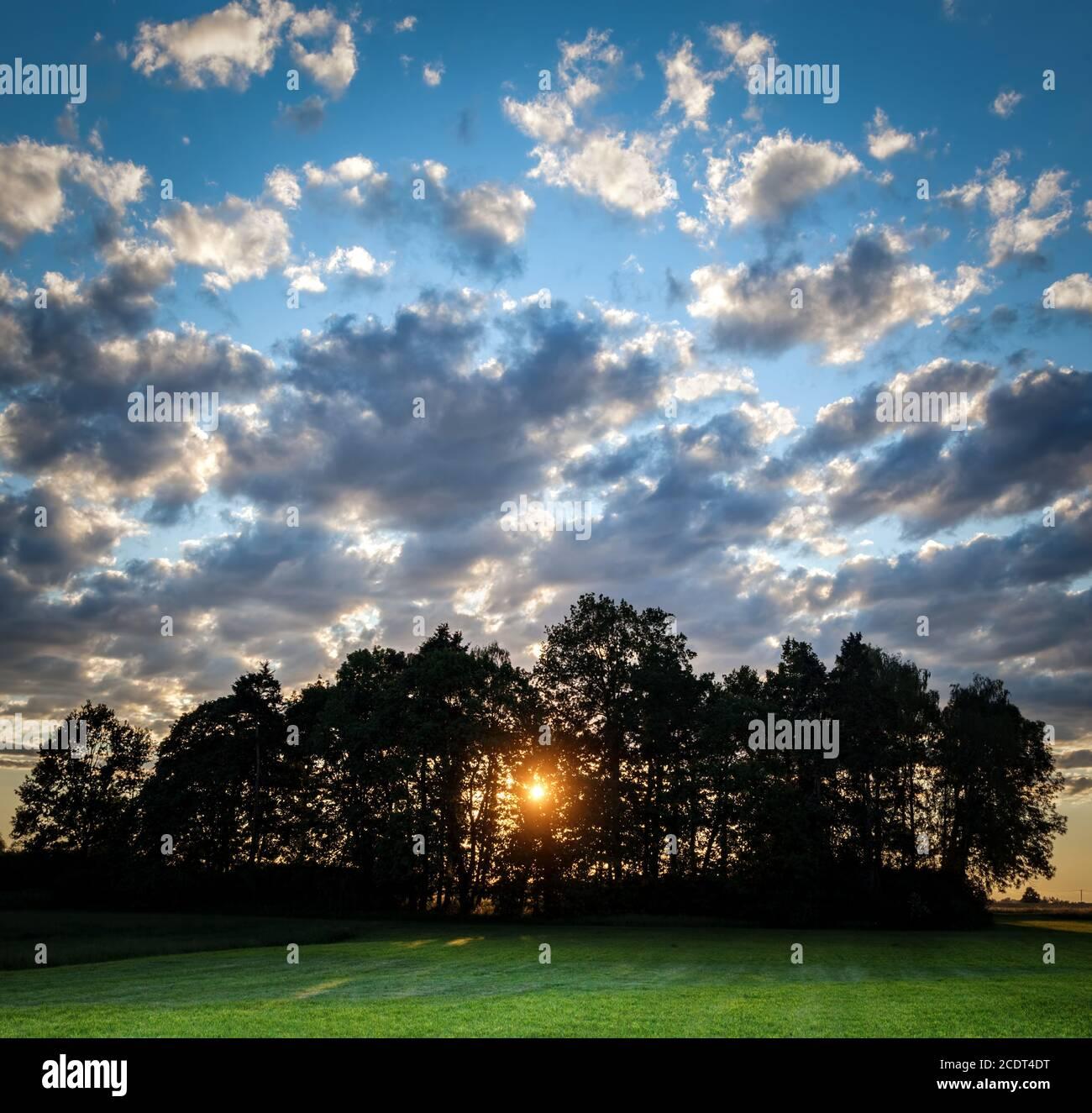 Sol brillando a través de los árboles al atardecer. Cielo nublado dramático. Campo verde Foto de stock