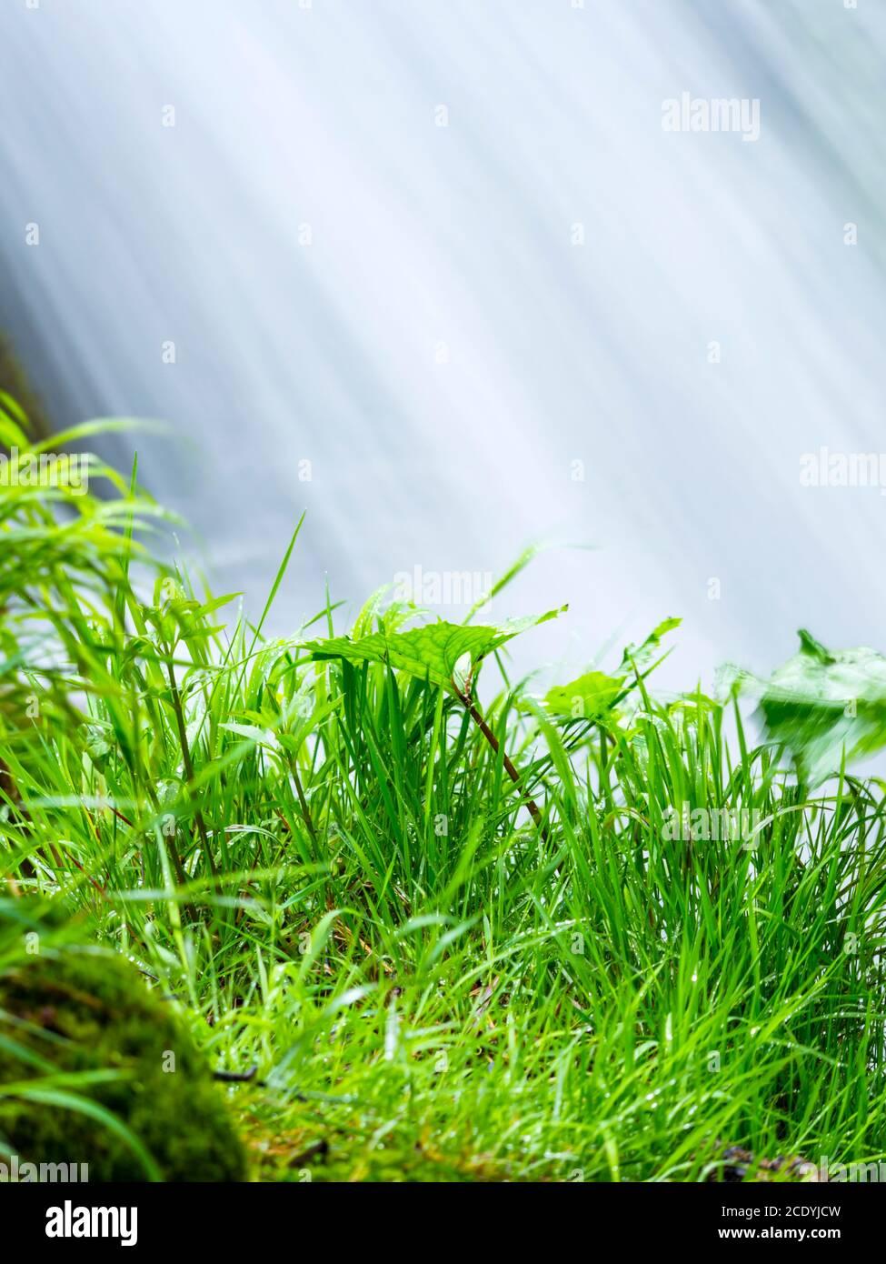 Parque nacional Lagos de Plitvice en Croacia Europa flujo de agua cascada escénico paisaje hierba cerca caída río detalle aislado Foto de stock