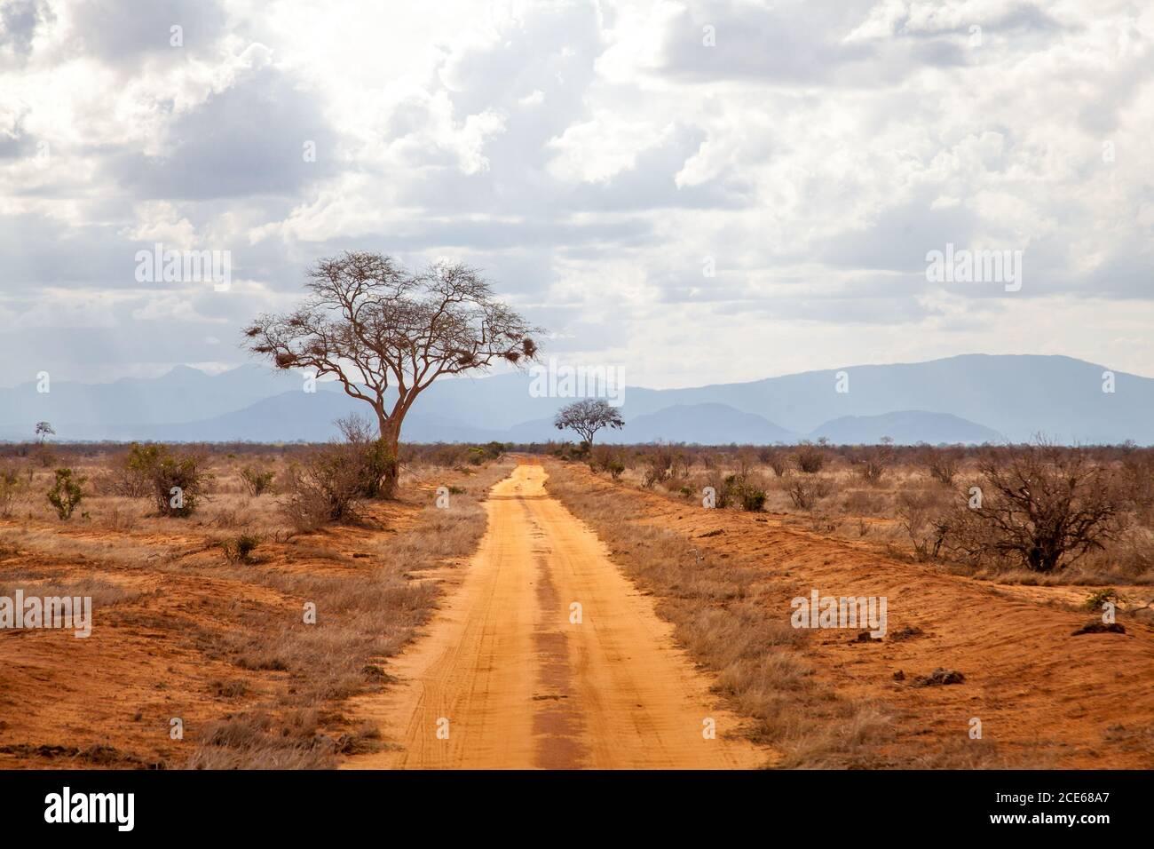 Árboles por la carretera, escenografía de Kenya, con colinas en el lejano Foto de stock